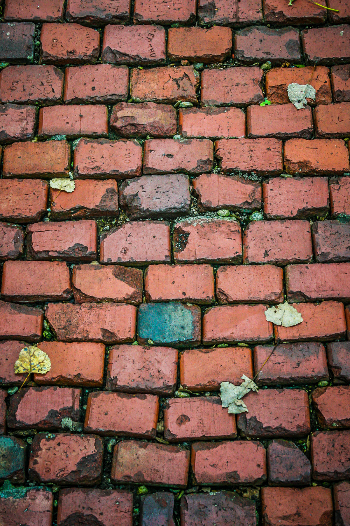A brick sidewalk found in Fort Worth's Botanic Garden.