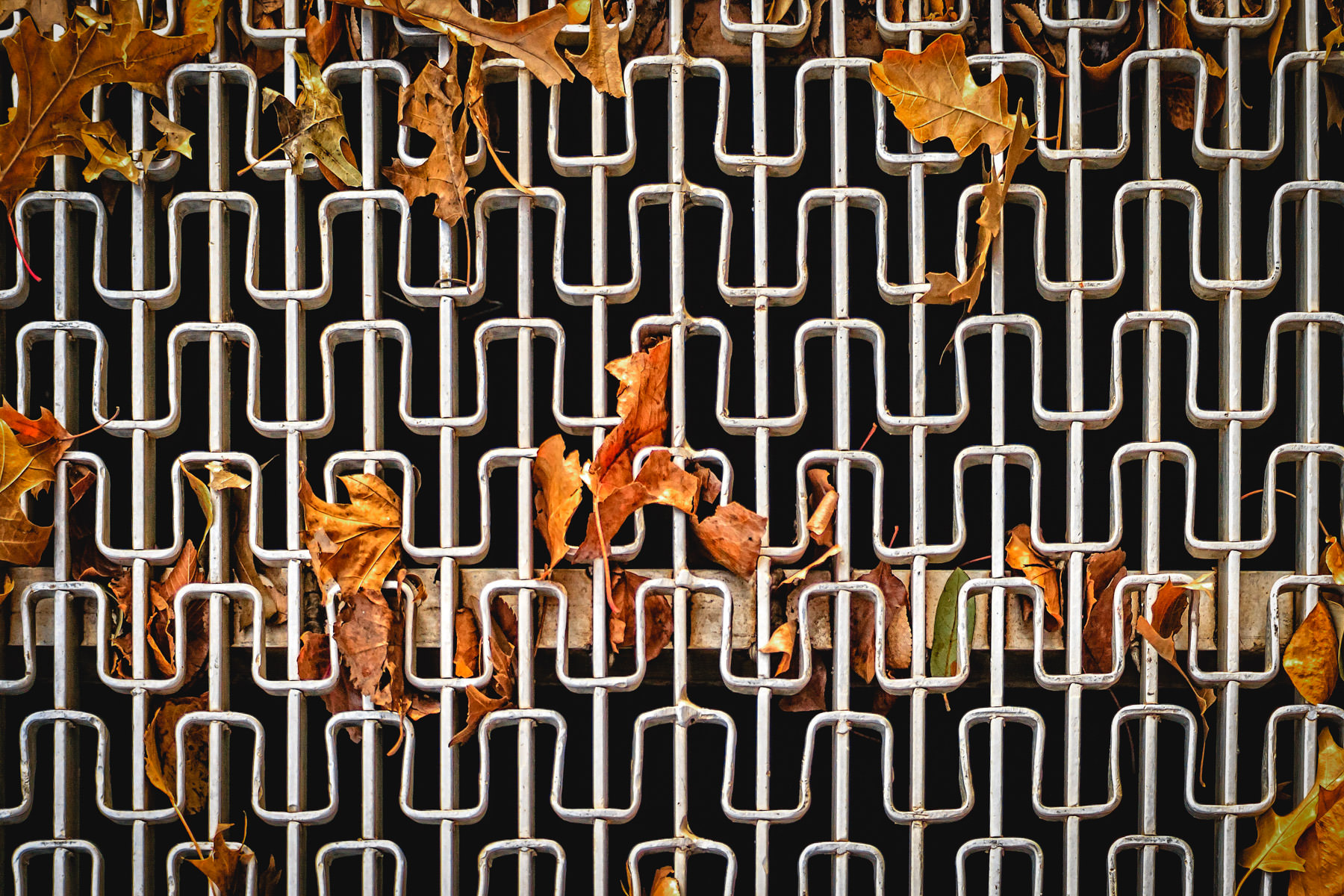 Leaves trapped in a grate in Wichita Falls, Texas.