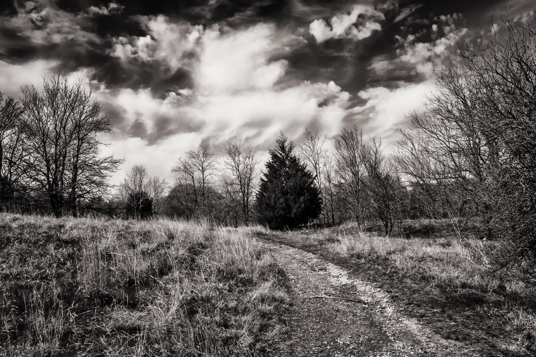 A path leads past trees on a ridge in Plano, Texas' Arbor Hills Nature Preserve.