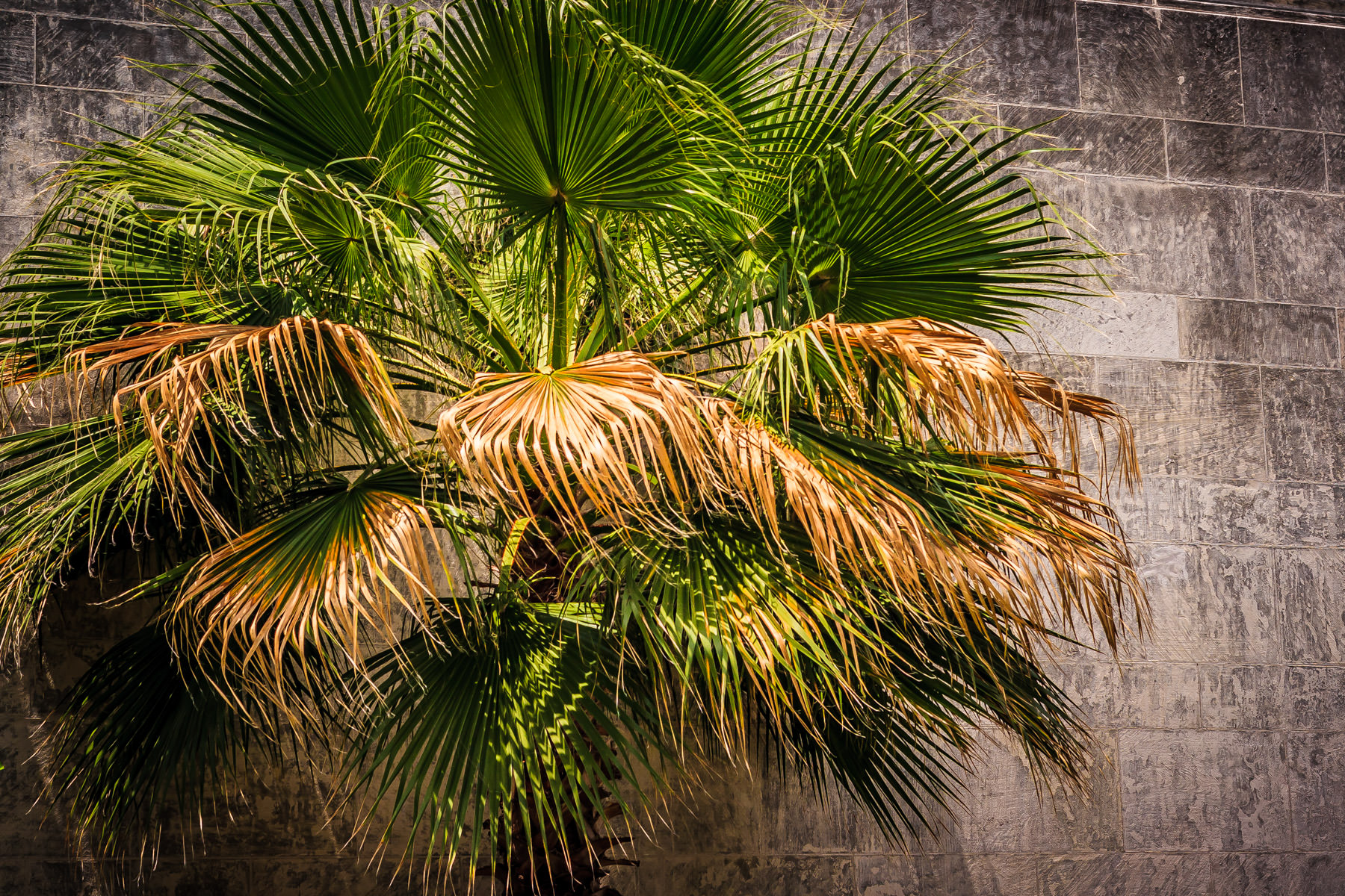 A palm tree at Dallas' Fair Park.