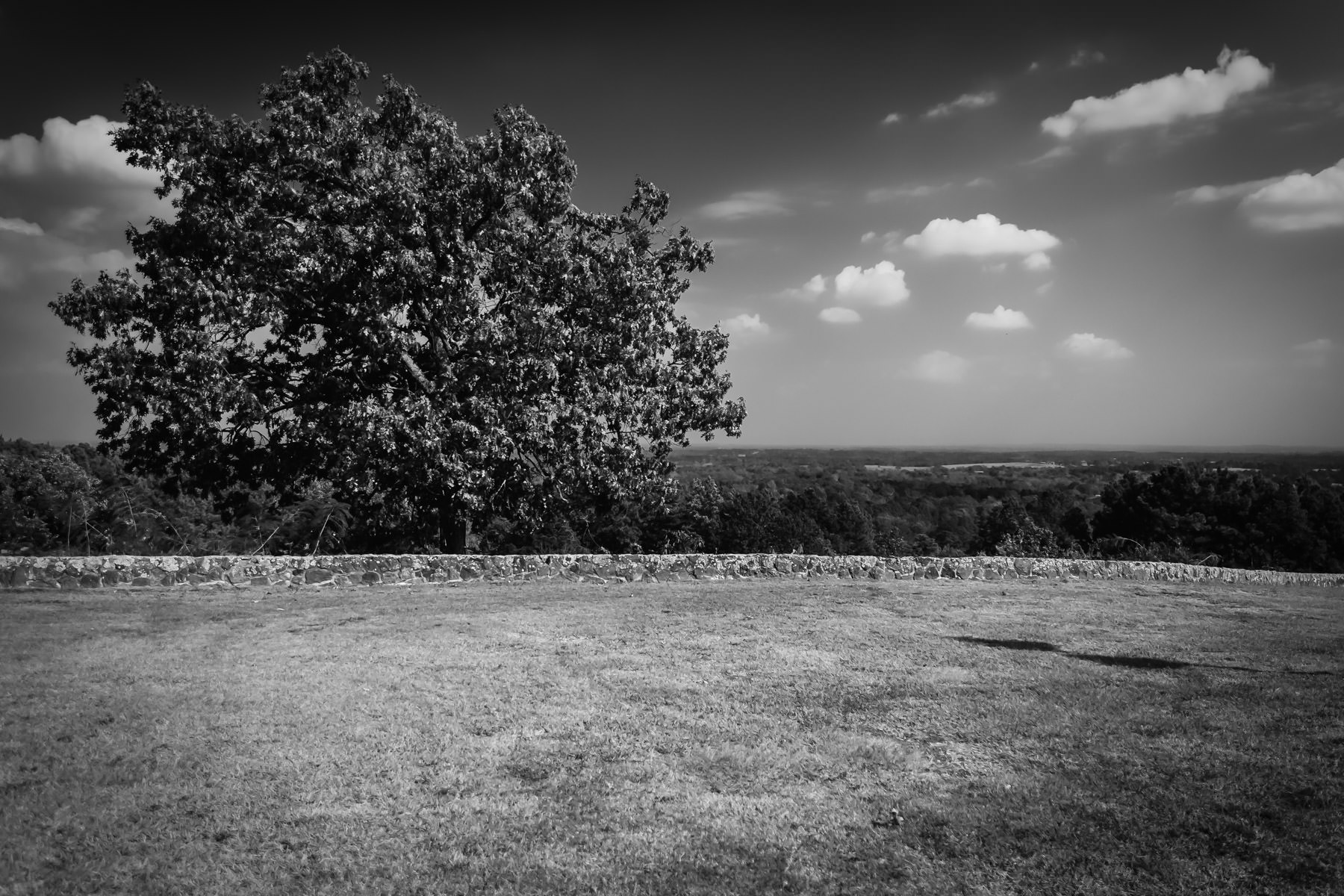 A tree and the view from Love's Lookout in Jacksonville, Texas.