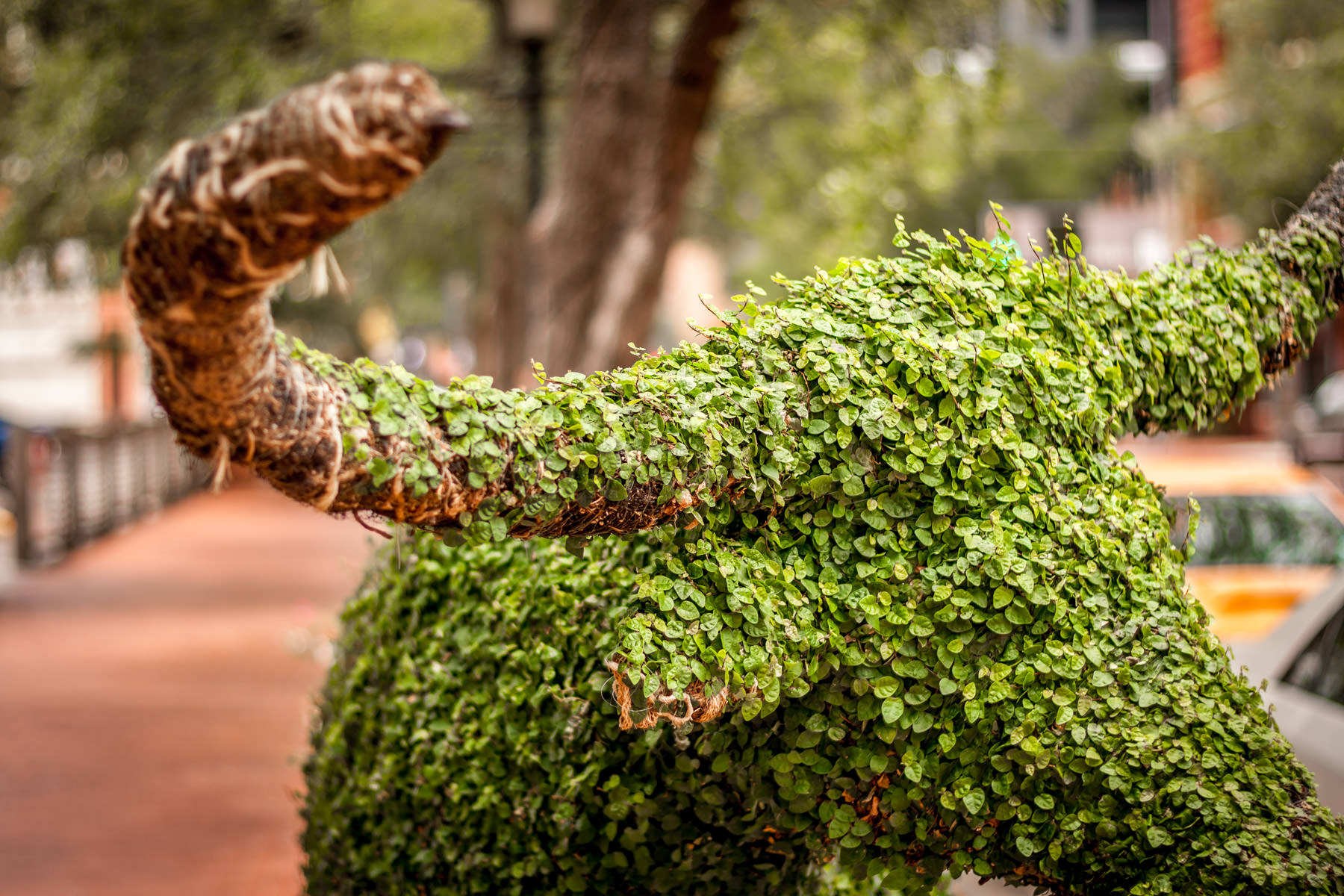 A topiary shaped like a longhorn bull at Sundance Square, Fort Worth, Texas.
