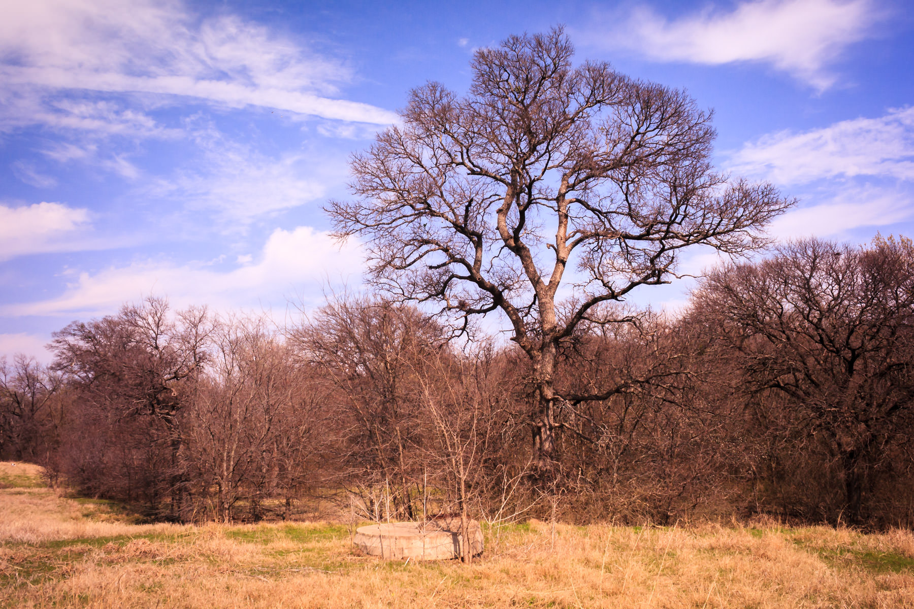 A tree at Plano, Texas' Arbor Hills Nature Preserve.