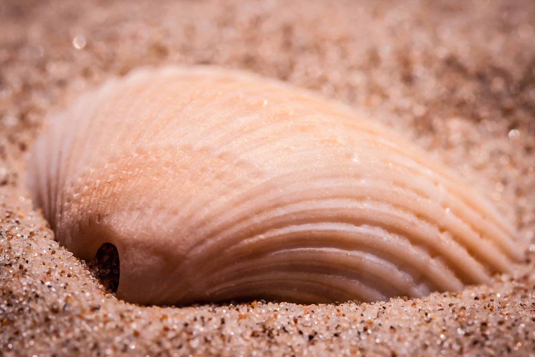 A seashell spotted on a South Padre Island, Texas, beach.