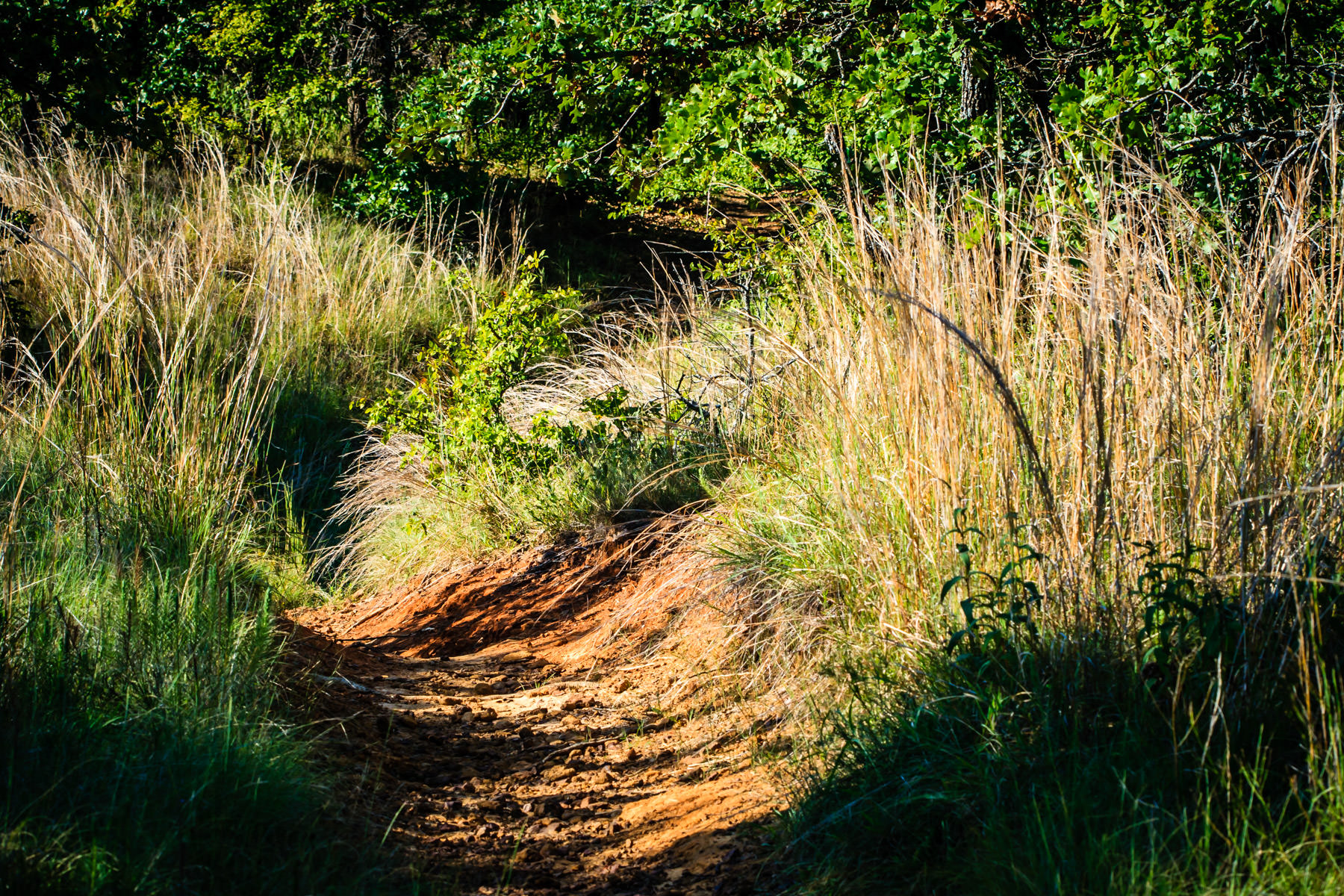 A red clay path worn through the tall grass at Texas' Lake Ray Roberts State Park.