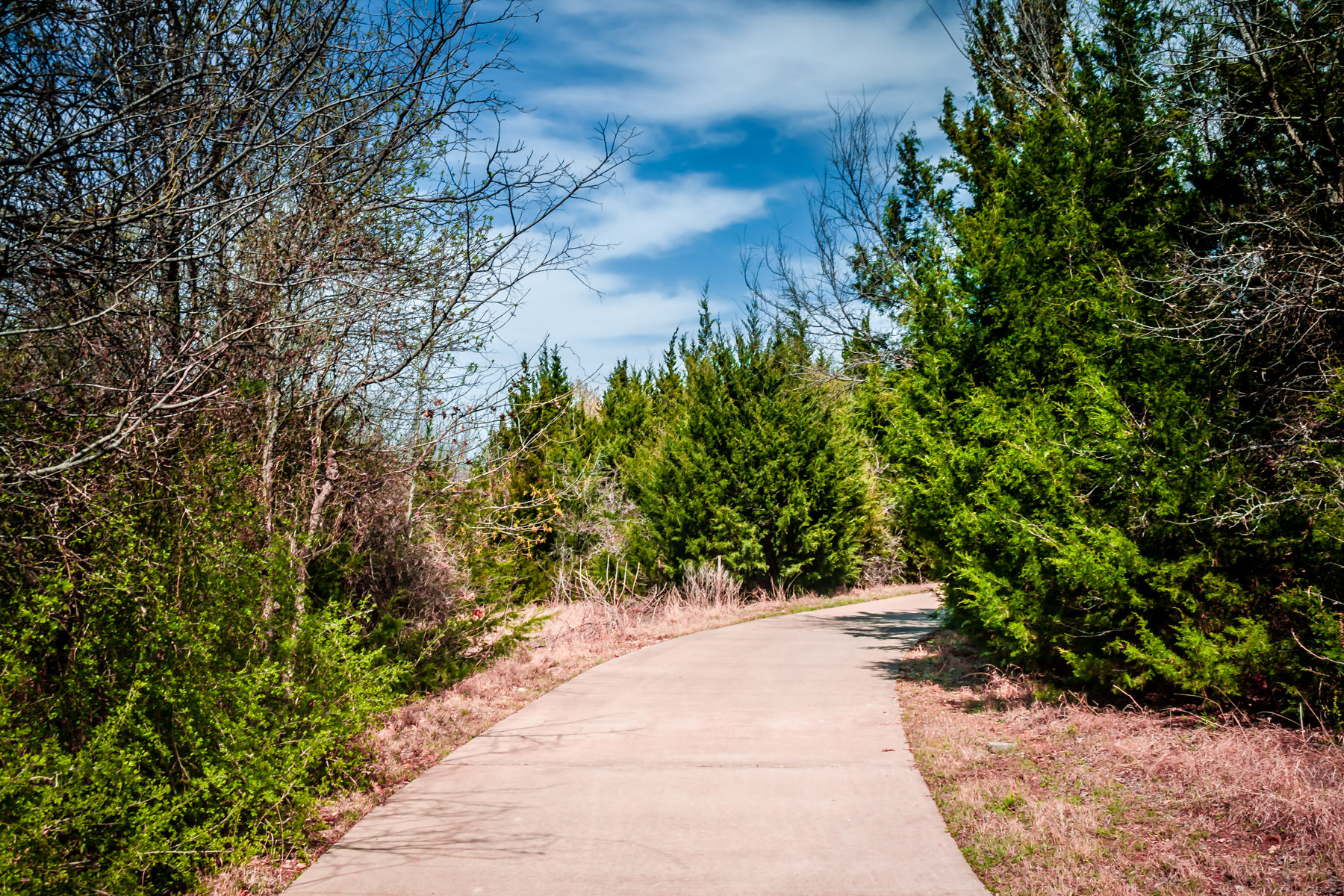A sidewalk winds through the trees at Plano, Texas' Arbor Hills Nature Preserve.