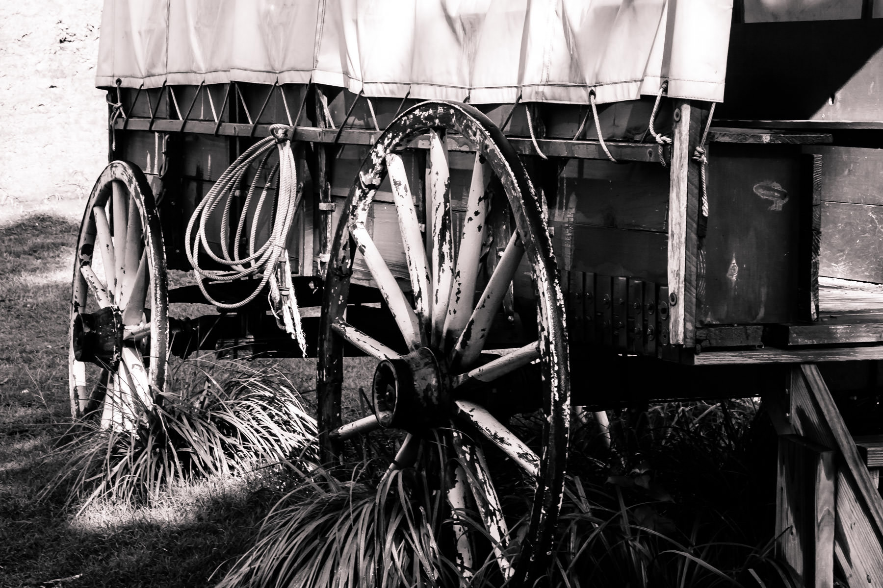 A covered wagon on exhibit at the Dallas Arboretum.