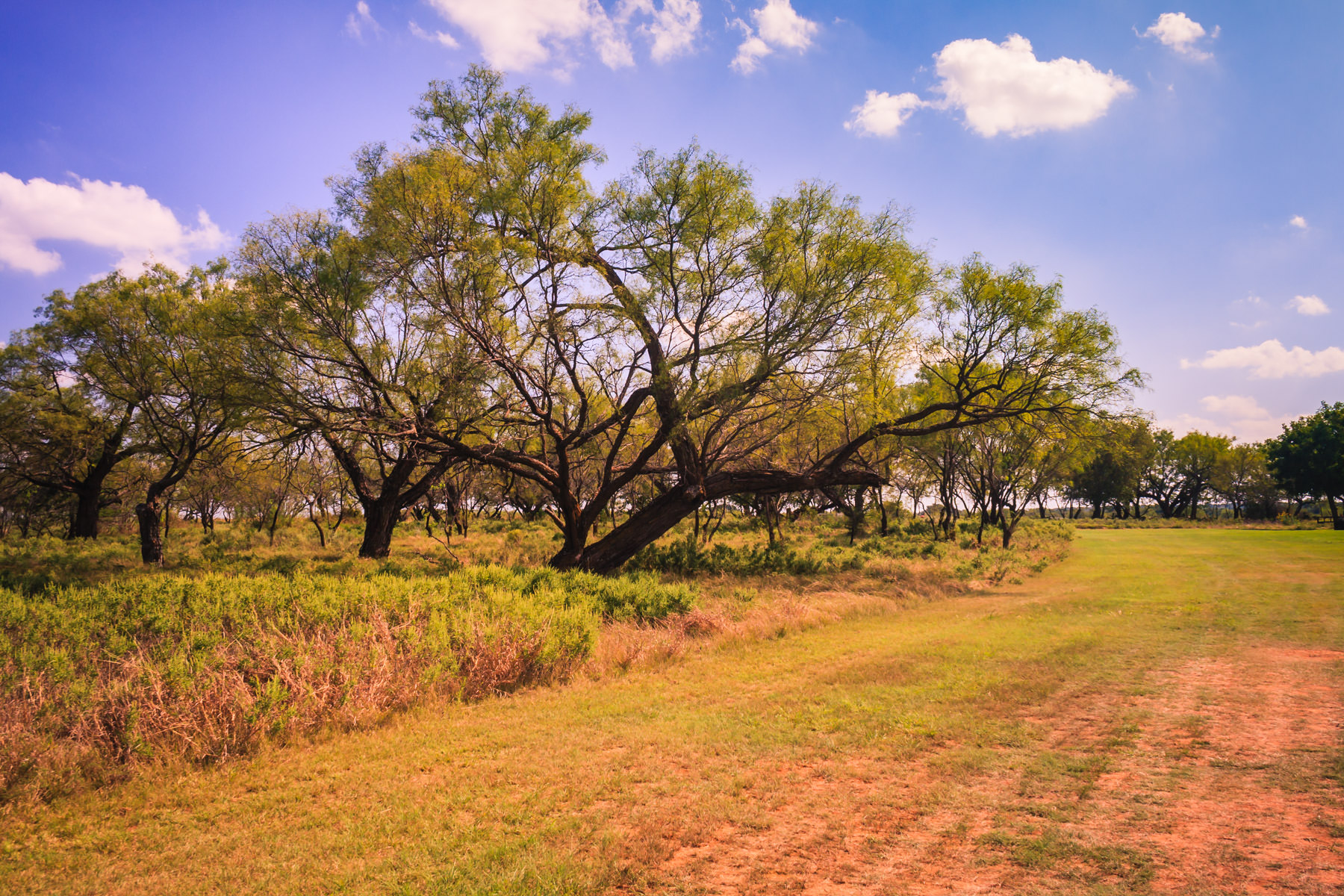 texas trees field