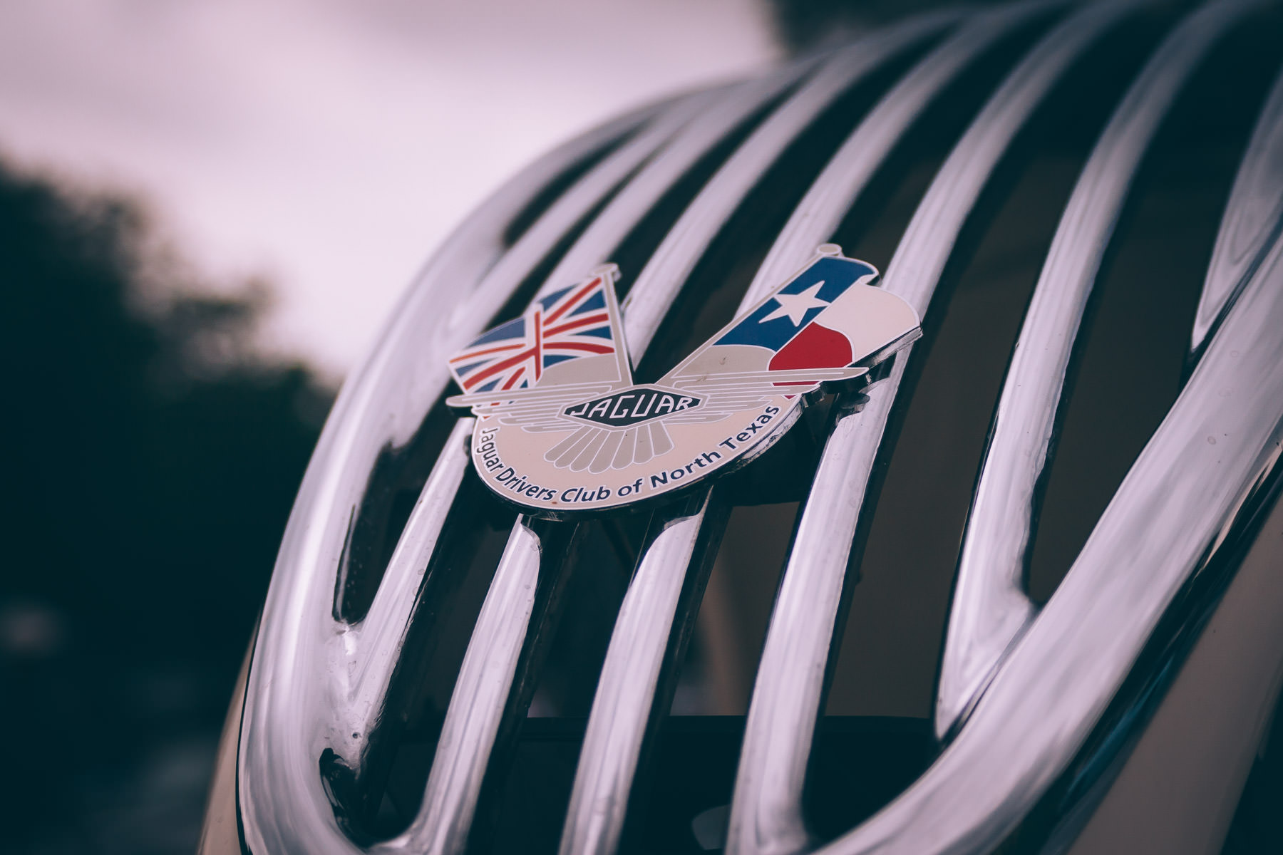 A badge on the grille of an antique Jaguar at Dallas' All British Car Day.