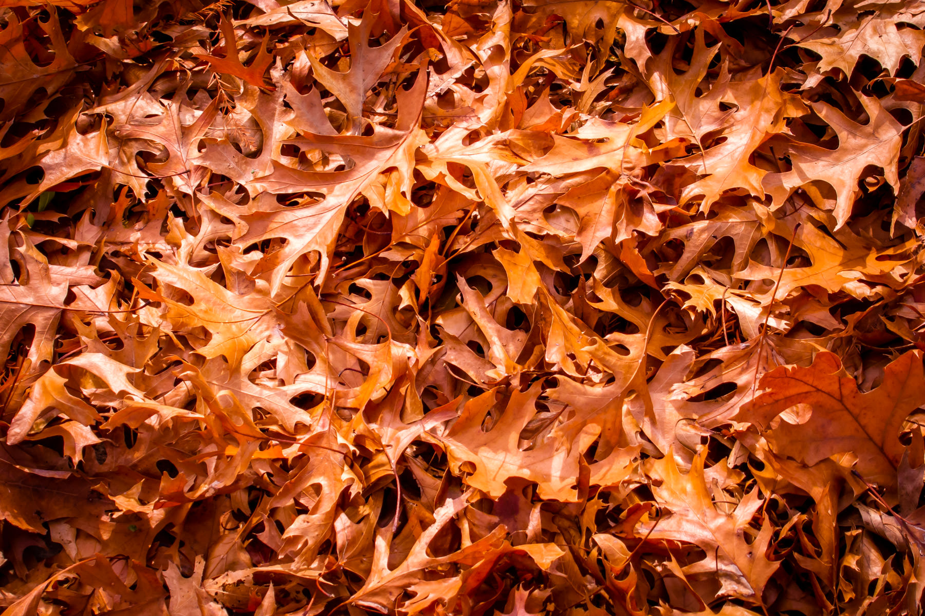 Autumn leaves, swept into a pile by the wind, spotted in Irving, Texas.