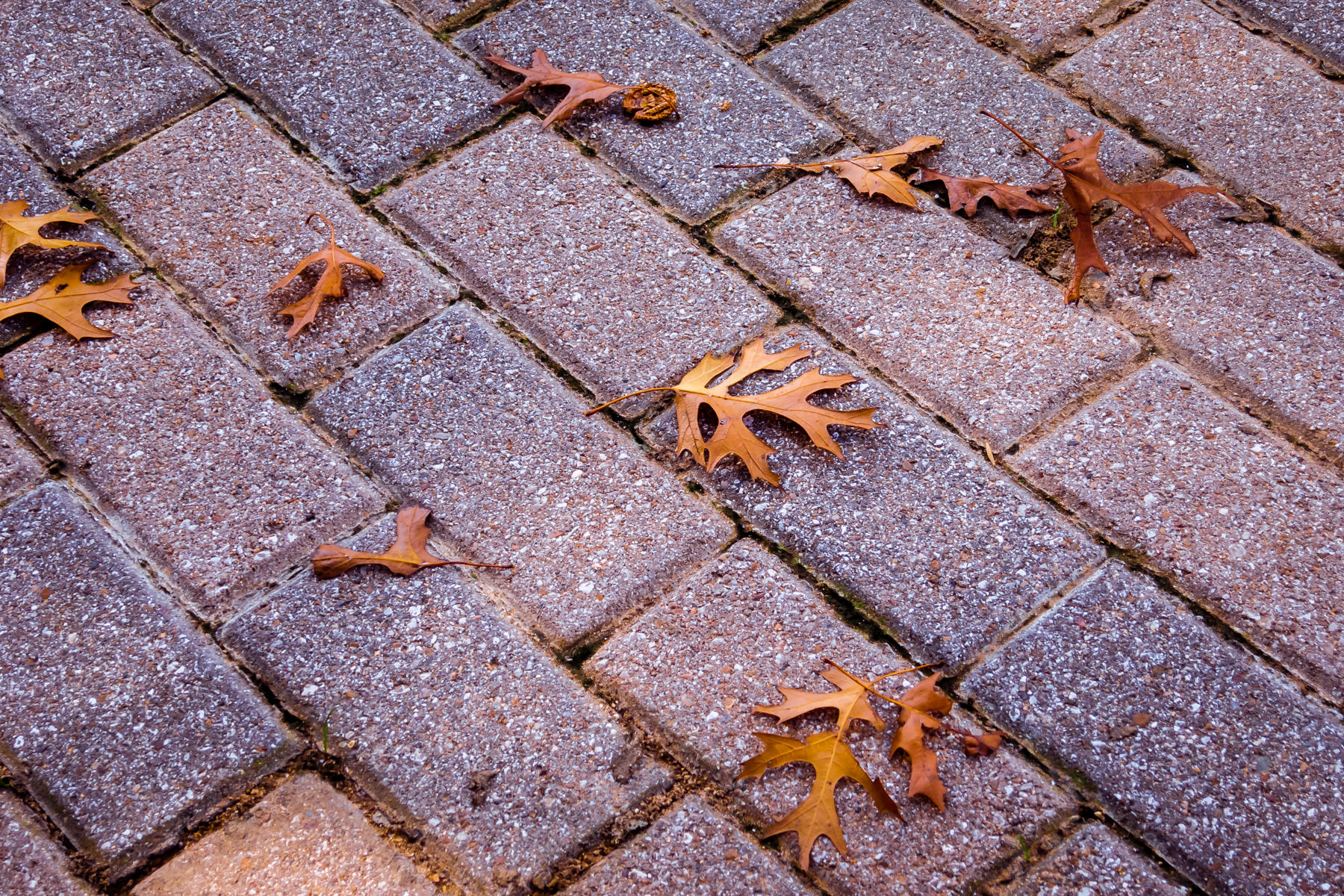 Leaves on a sidewalk in Irving, Texas.
