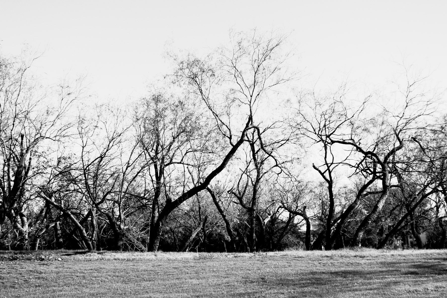 Trees on a ridge in Irving, Texas, bare of leaves for the winter.