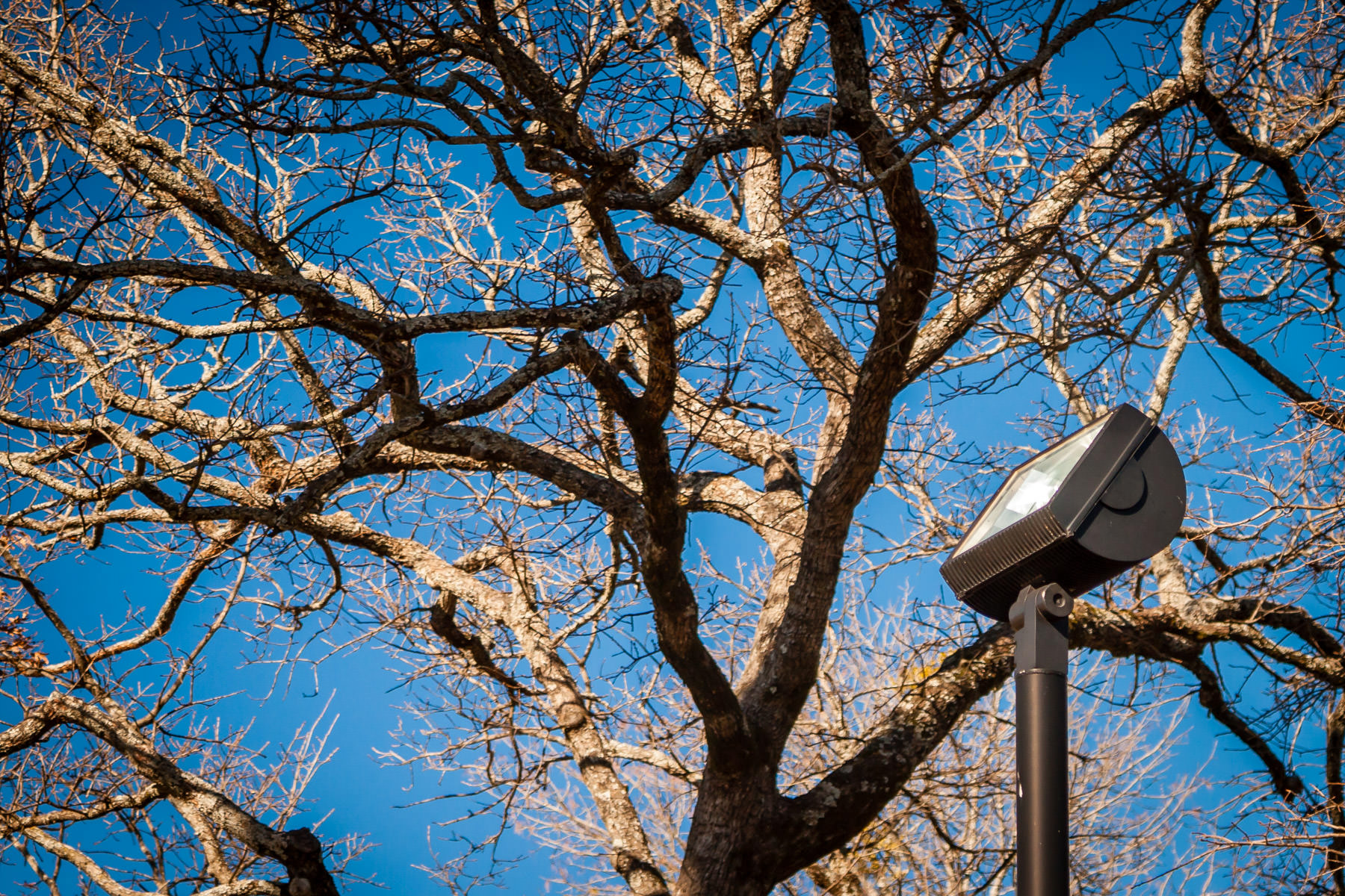 A light pole rises into trees on the campus of the University of Texas at Tyler.