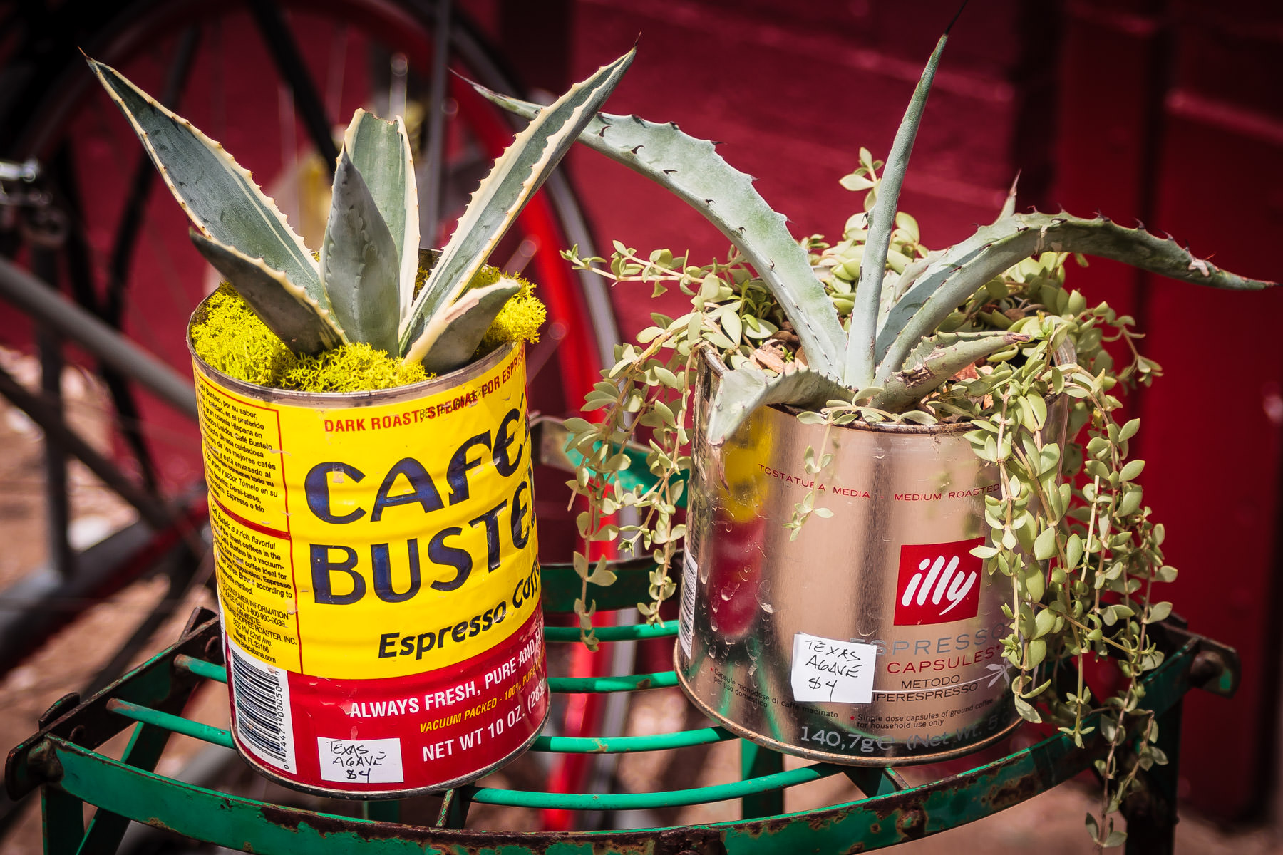Empty coffee cans re-purposed into planters, spotted outside a shop in Oak Cliff, Dallas.