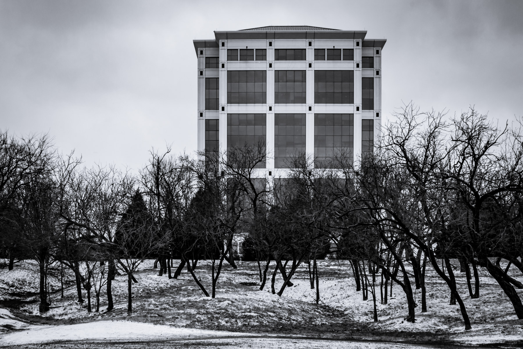 Spotted after a light snowfall in Las Colinas, Irving, Texas.