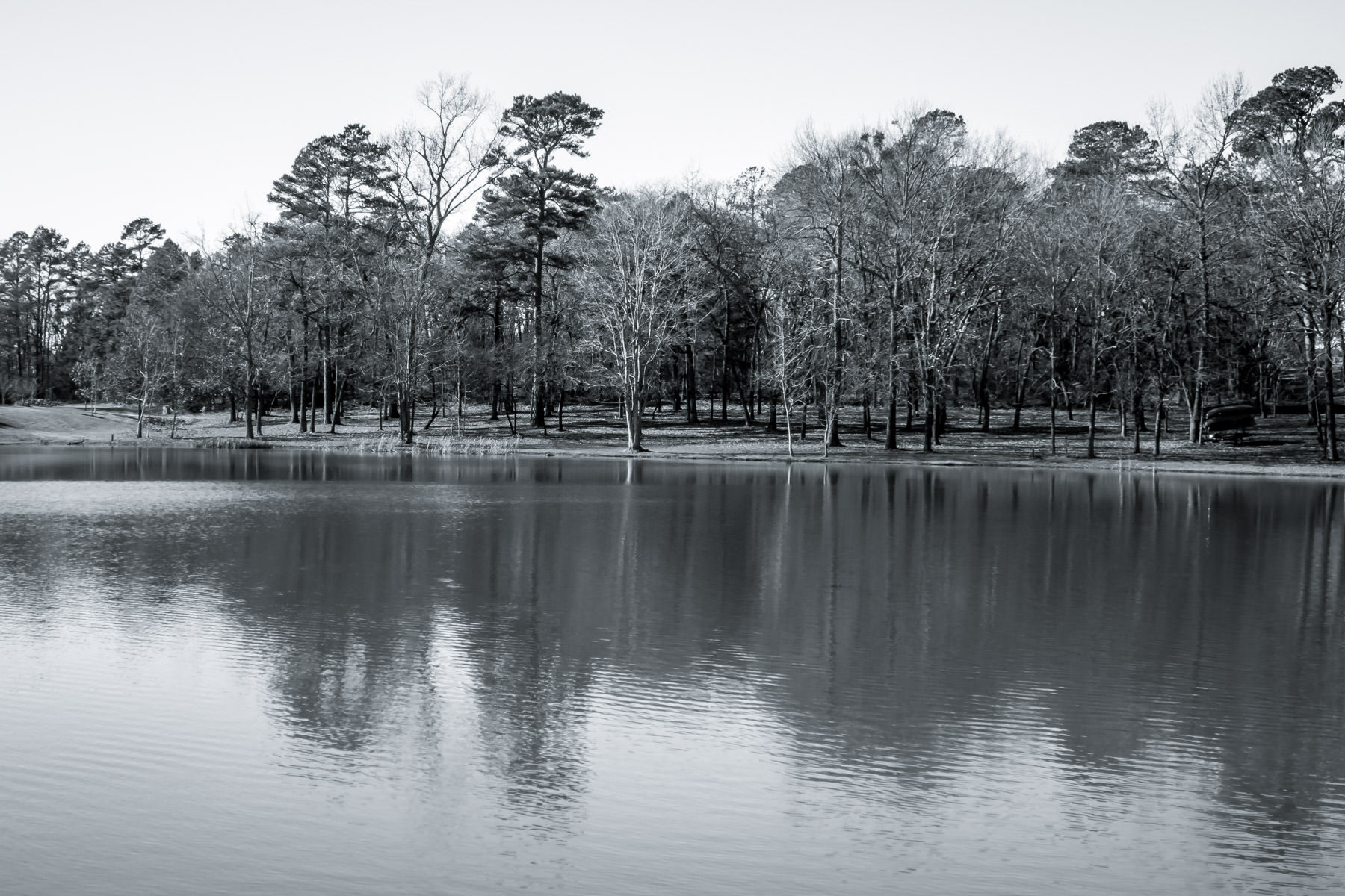 The shoreline of Harvey Lake on the campus of the University of Texas at Tyler.