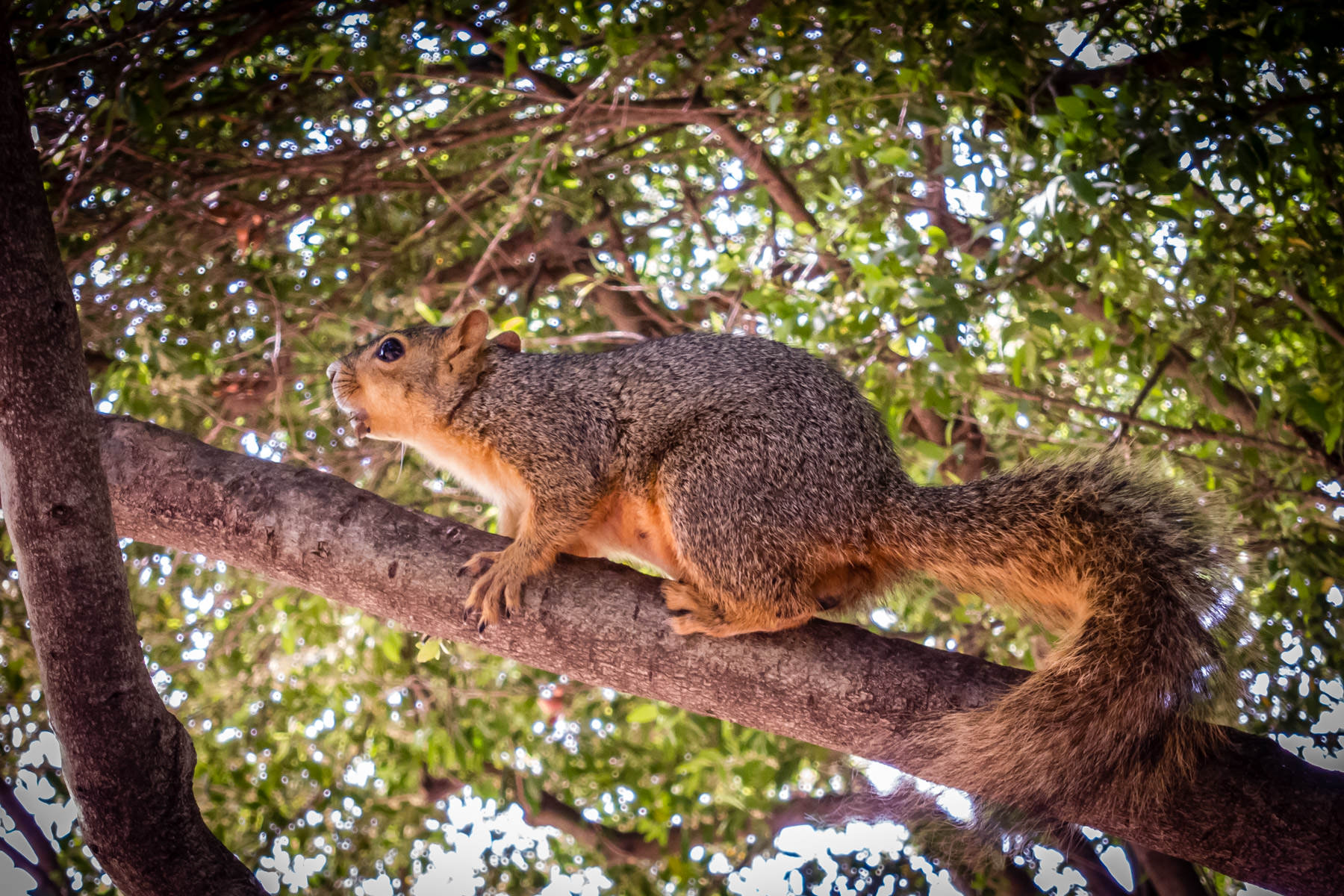 A squirrel at Celestial Park in Addison, Texas.