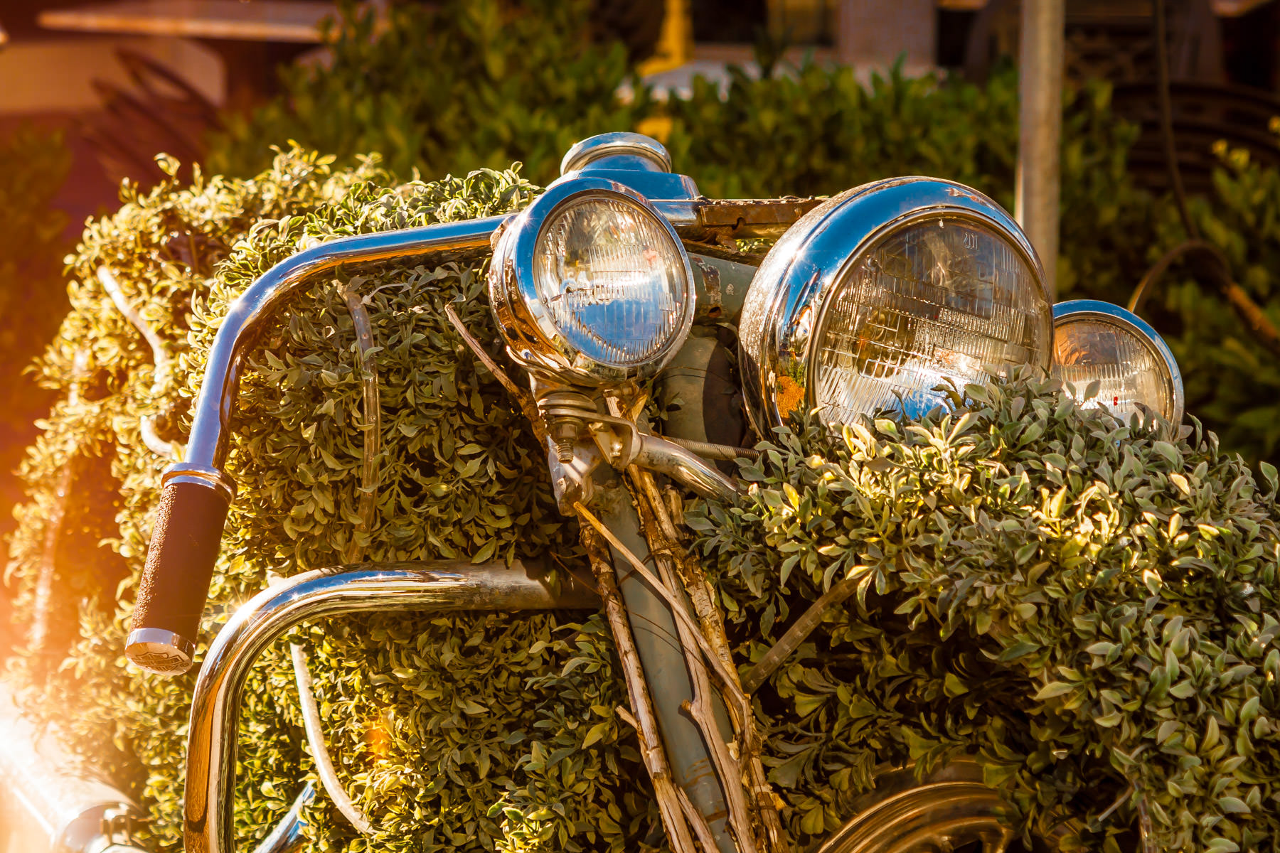 A motorcycle covered with vines at the Harley-Davidson Bar and Grill, Las Vegas.