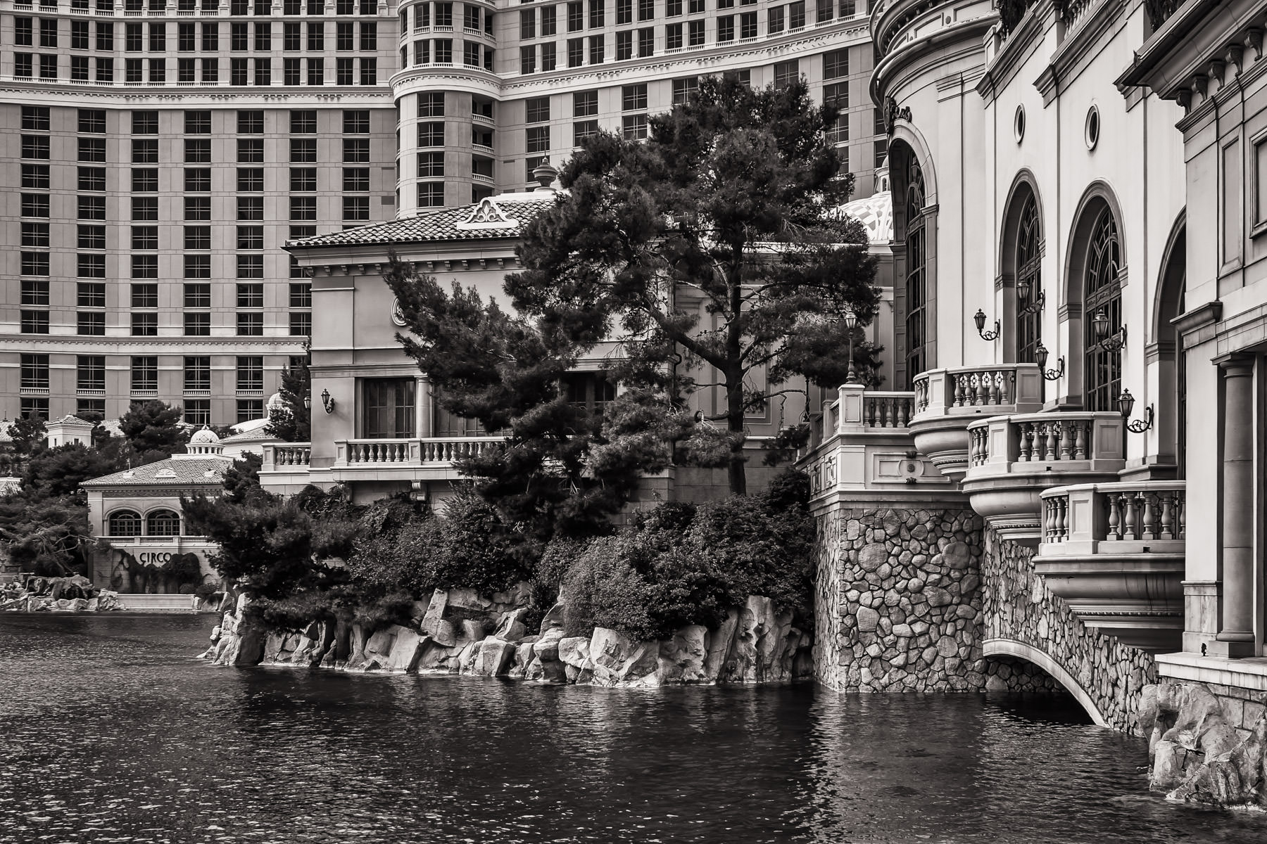 A tree grows along the side of the man-made 8-acre lake in front of The Bellagio, Las Vegas.
