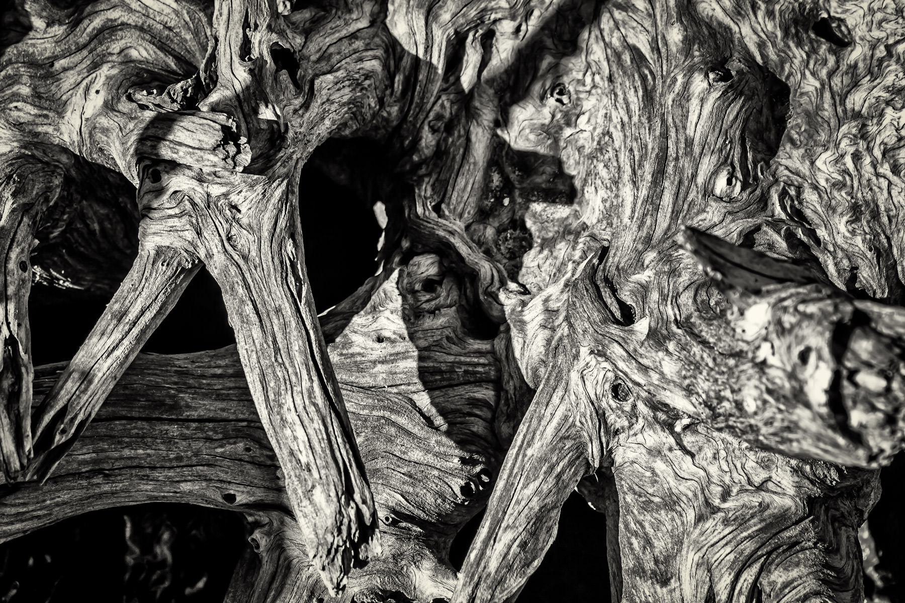 Textures abound in this interesting East Texas find of dead tree branches.