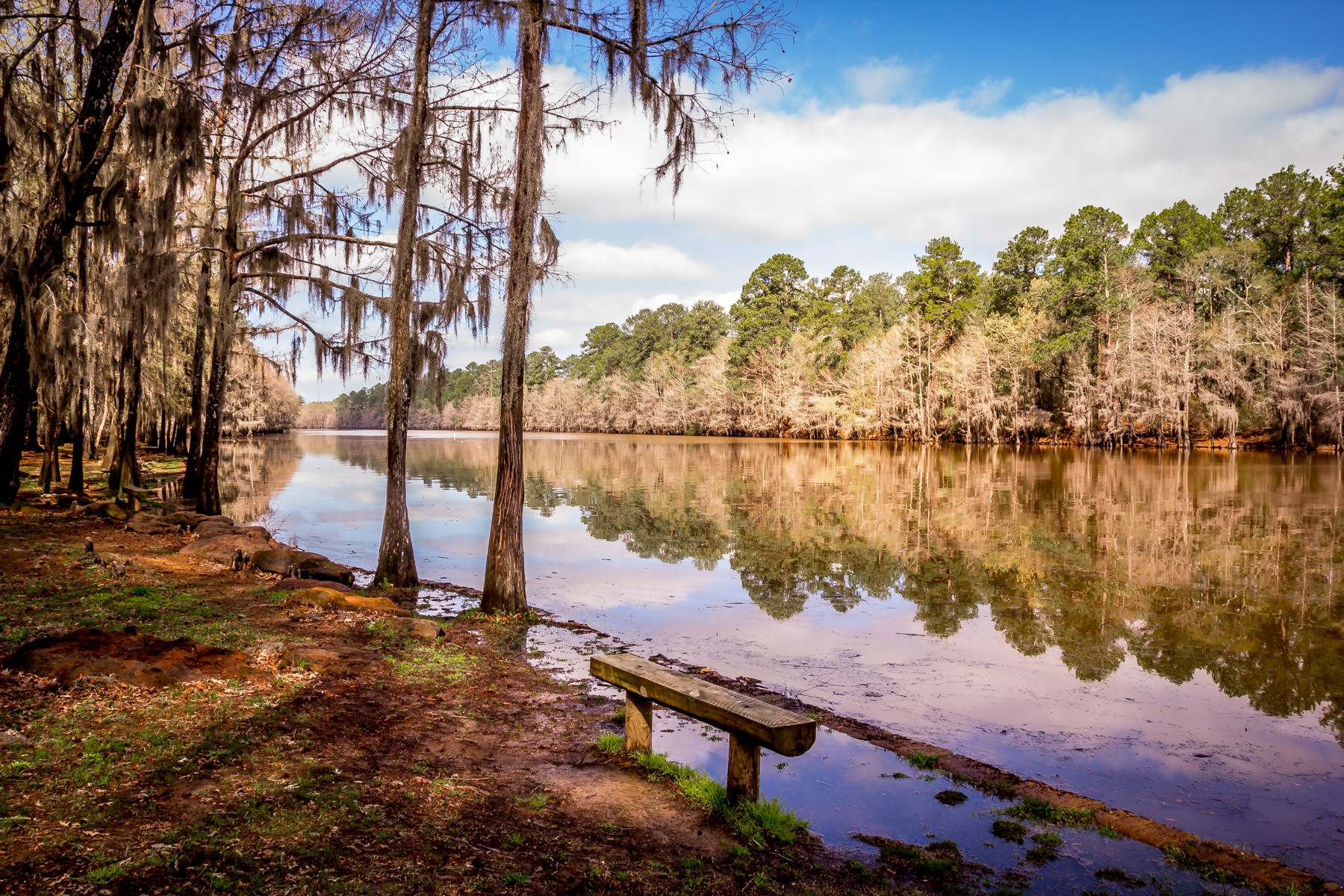Trees and the sky reflected in the lake at Caddo Lake State Park, Texas.