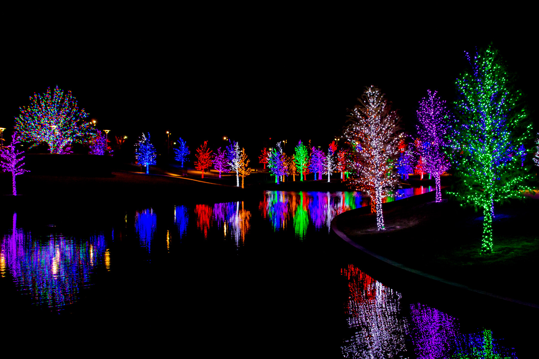 Trees in Addison, Texas' Vitruvian Park decorated for the holidays.
