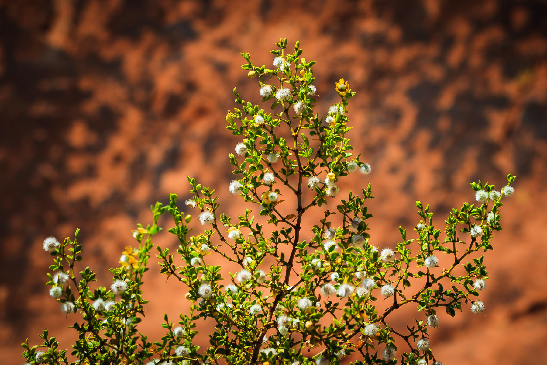 A plant bakes in the Nevada sun at Valley of Fire State Park.