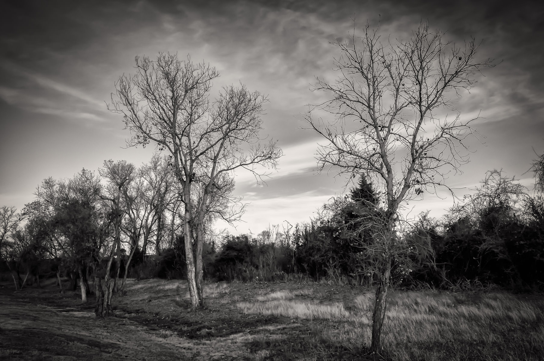 Trees on a cold winter morning in Granbury, Texas.