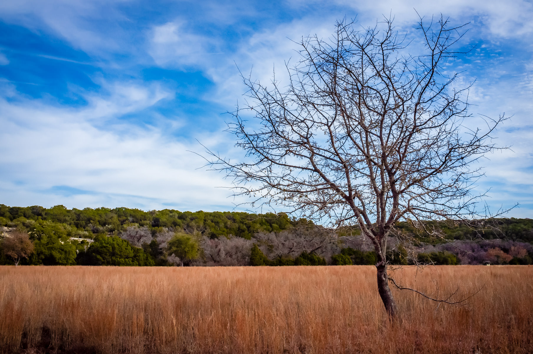 A lonesome tree grows in a field at Dinosaur Valley State Park near Glen Rose, Texas.