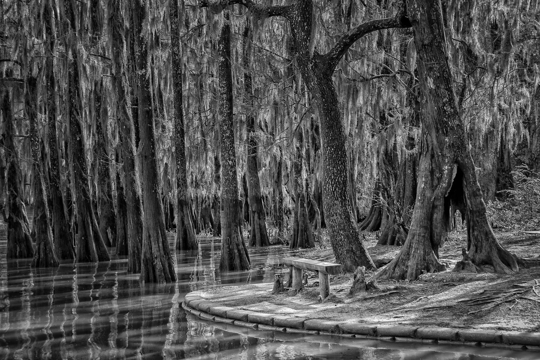 Cypress trees rise around a bench at Caddo Lake State Park, Texas.