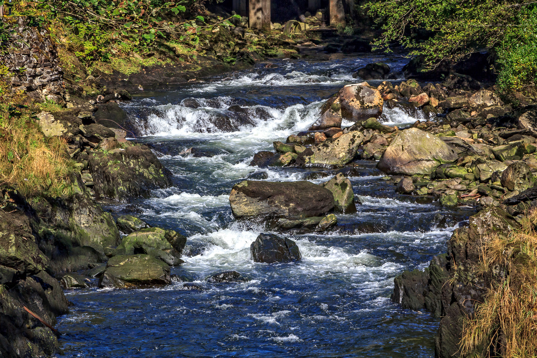 A small brook flows through Ketchikan, Alaska.