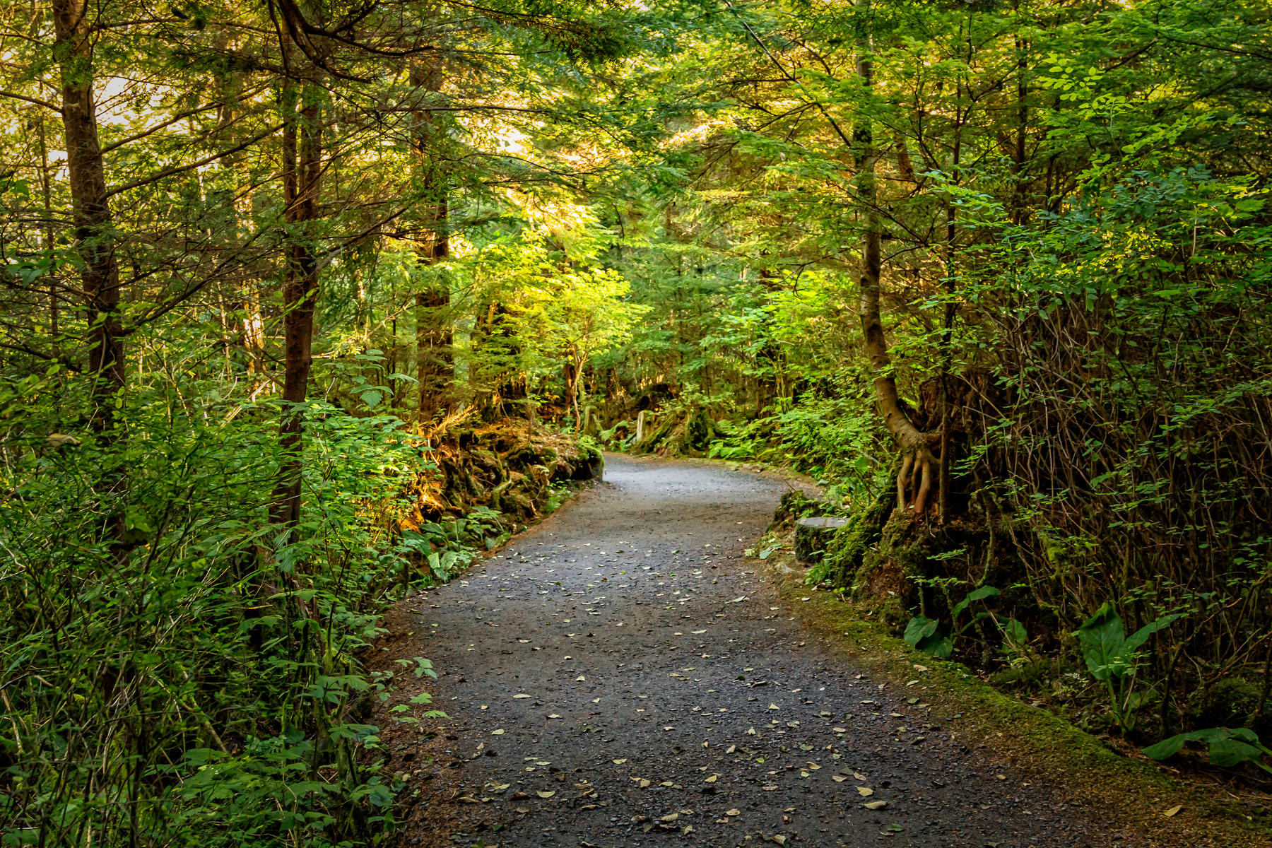 Sunlight illuminates the trees along a path through Ketchikan, Alaska's Totem Bight State Park.