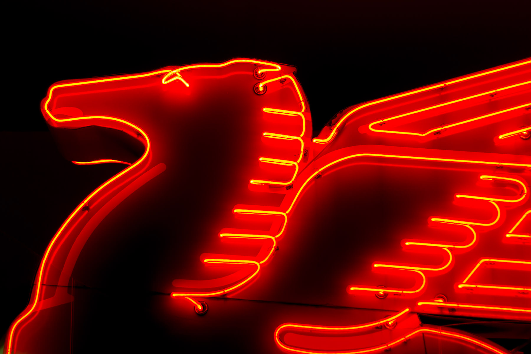 Detail of the 70-year-old, 11-foot-tall neon Pegasus sign that once stood atop Downtown Dallas' Magnolia Petroleum Building. It now alights in the lobby of Dallas' Old Red Museum of Dallas County History and Culture, having been replaced by a reproduction atop the restored Magnolia Building (now a boutique hotel) in 1999.