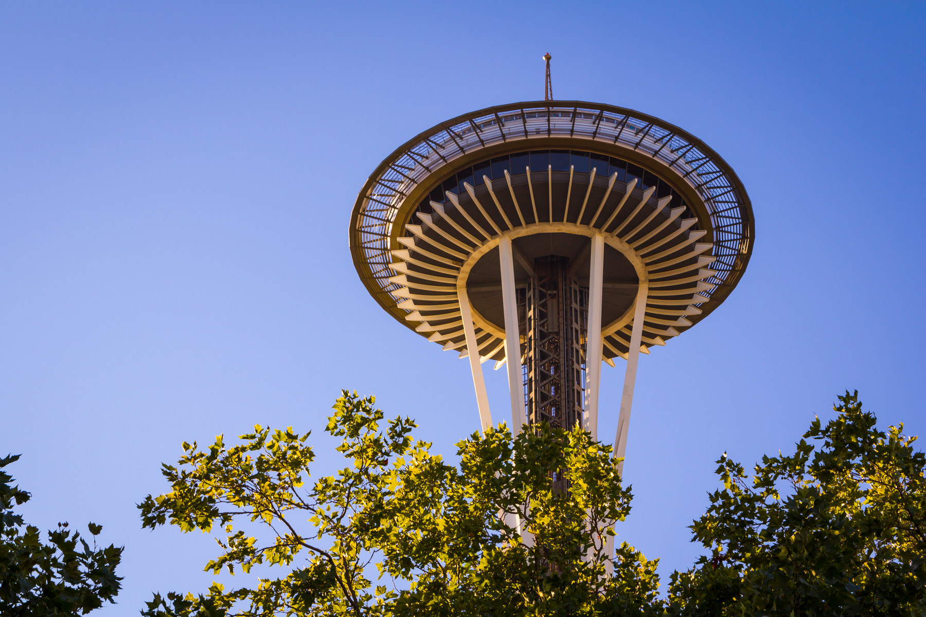 Seattle's Space Needle—built for the 1962 World's Fair—rises above the surrounding trees at the Seattle Center.