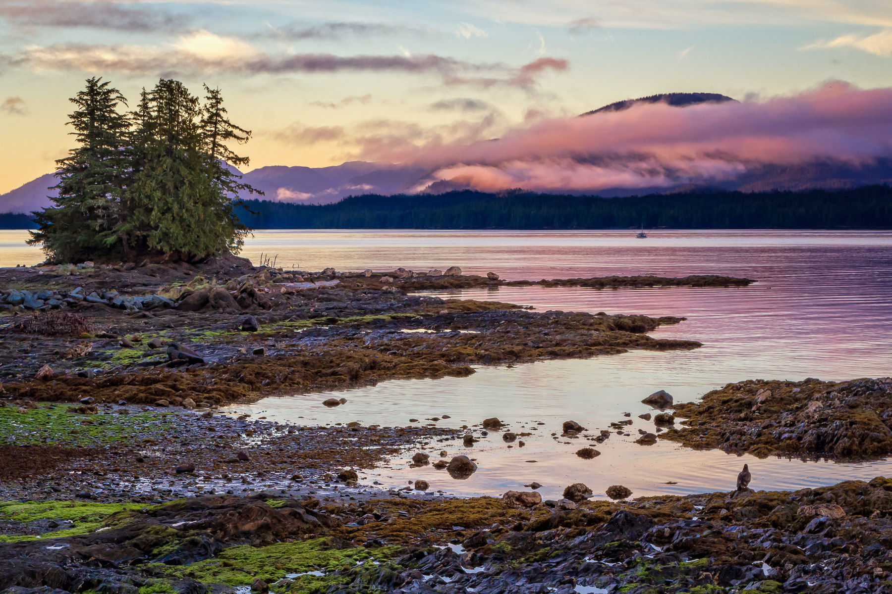 The first light of the sun illuminates the Tongass Narrows just north of Ketchikan, Alaska.