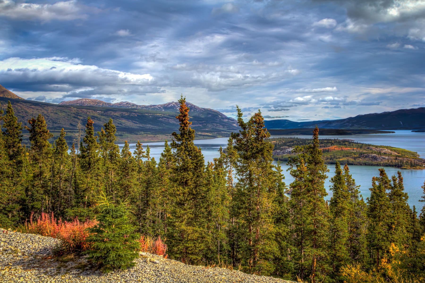 Pine trees survey the Yukon Territory's Tagish Lake and Bove Island.