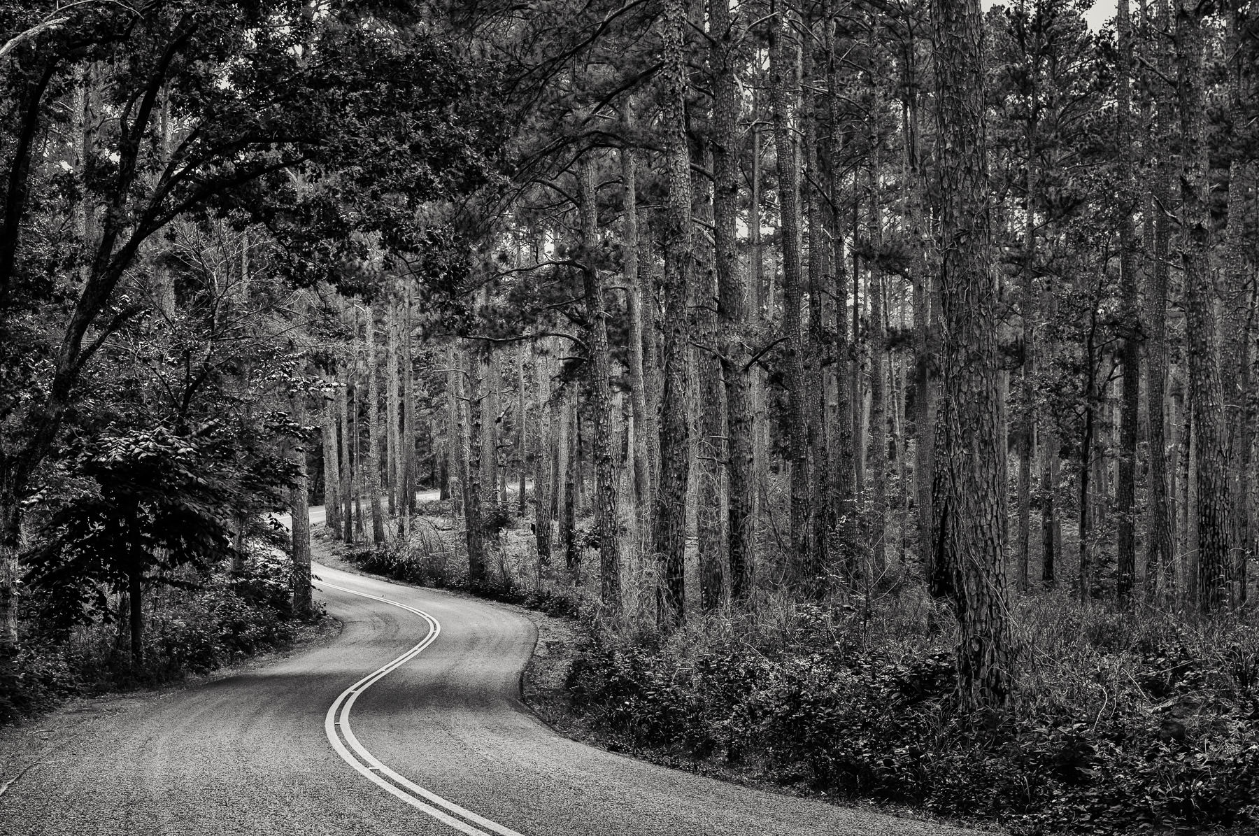 A road winds through the pine forest of Tyler State Park, Texas.
