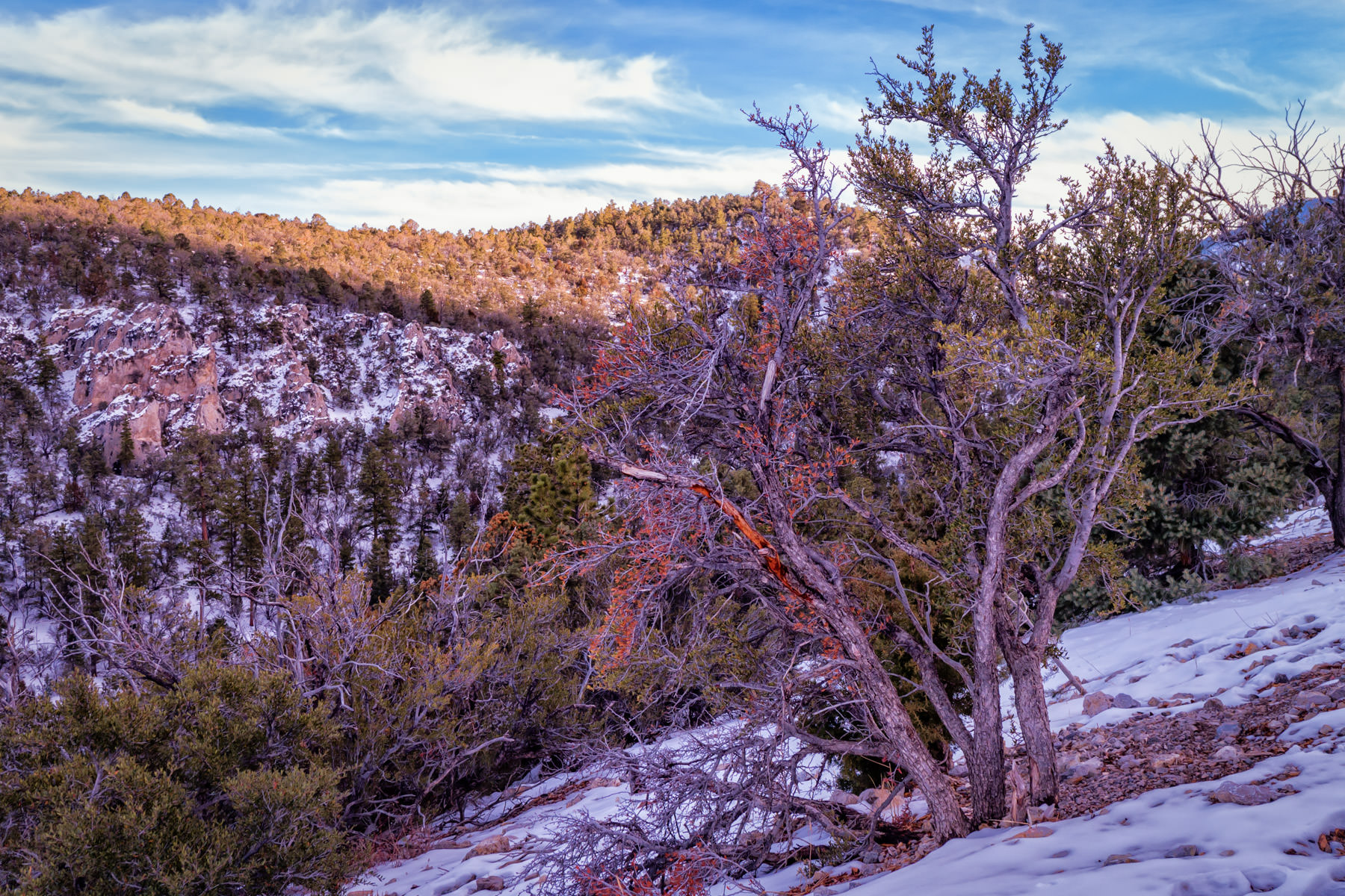 A tree grows on a foothill of Nevada's Mount Charleston as a light dusting of snow coats the surroundings.