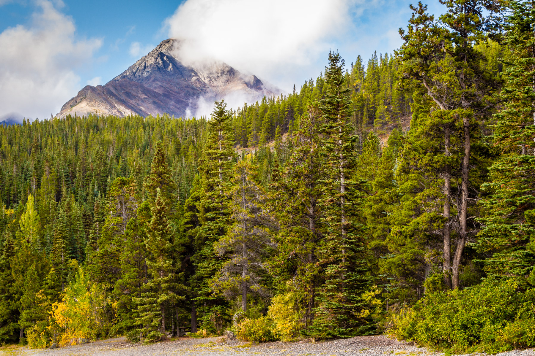 Pine trees grow along the shore of Tutshi Lake, British Columbia, Canada.