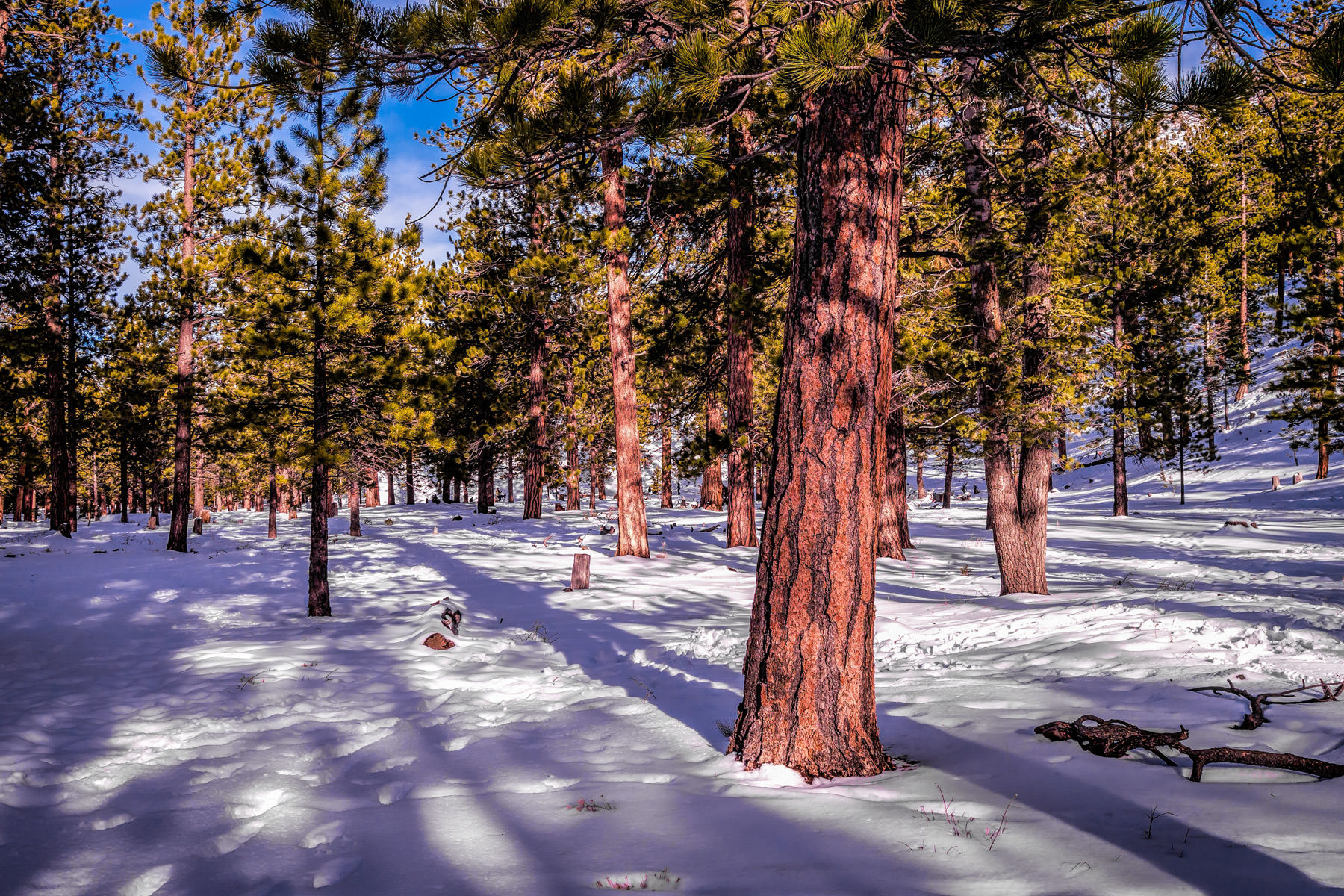mount charleston snowfield
