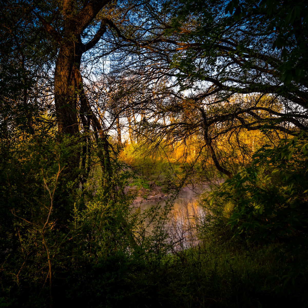 The early-morning sun lights up the far bank of the Trinity River as it meanders through the Great Trinity Forest in South Dallas.
