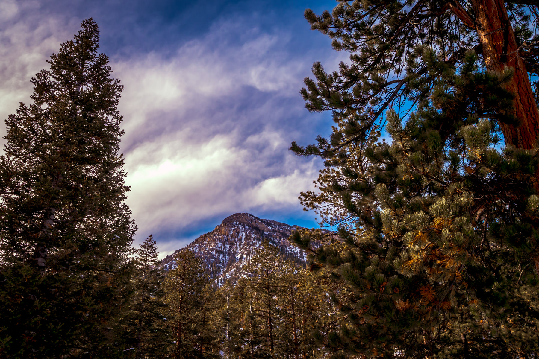 A snow-covered prominence of Nevada's Mount Charleston rises above the surrounding forest.