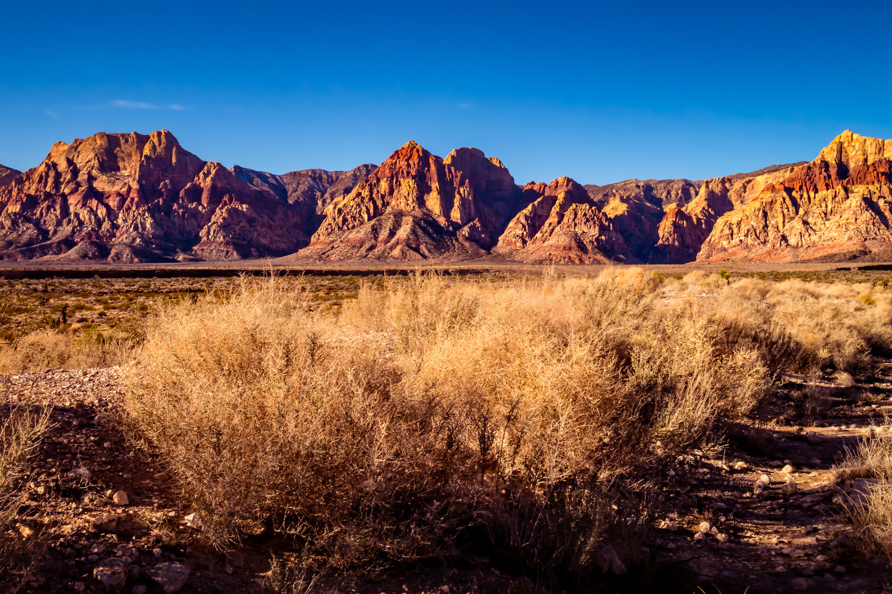 Desert brush grows amongst the mountains of Nevada's Red Rock Canyon.