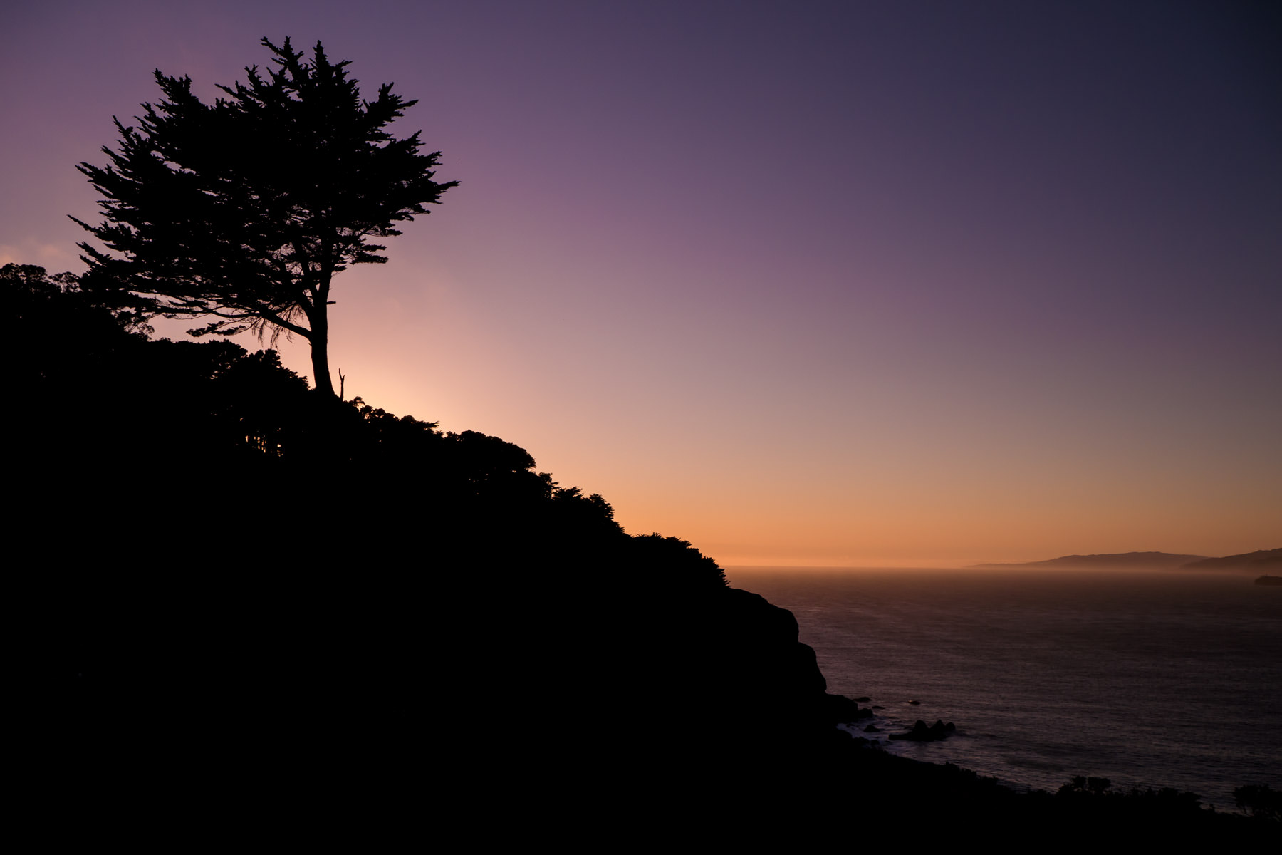 The setting sun silhouettes a tree atop the hilly terrain of San Francisco's Lands End.