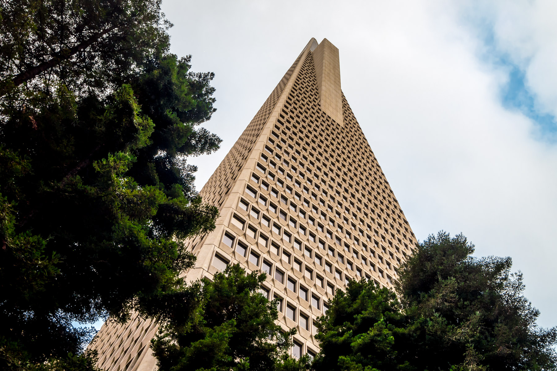 San Francisco's tallest building, the Transamerica Pyramid, rises above the neighboring Redwood Park into the grey Northern California sky.