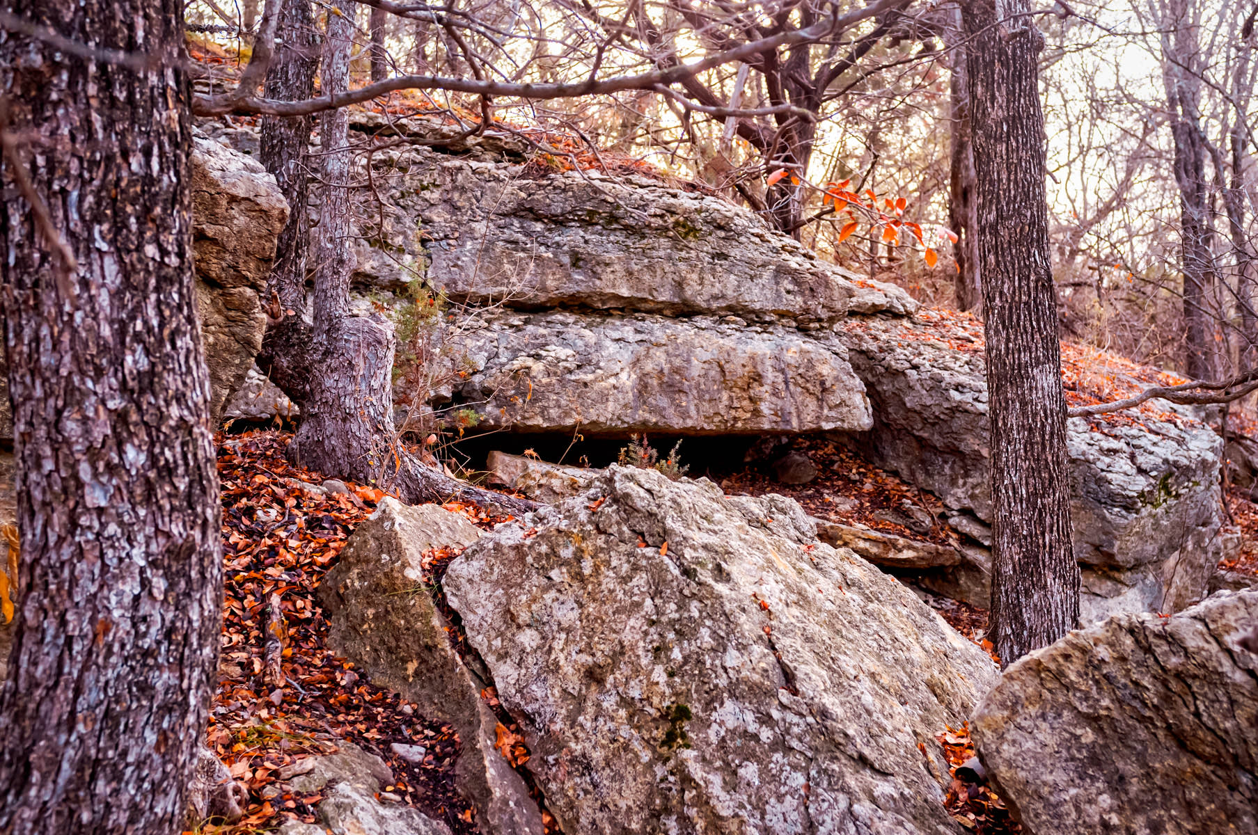 Autumn leaves scattered upon a rocky outcropping at Texas' Dinosaur Valley State Park.