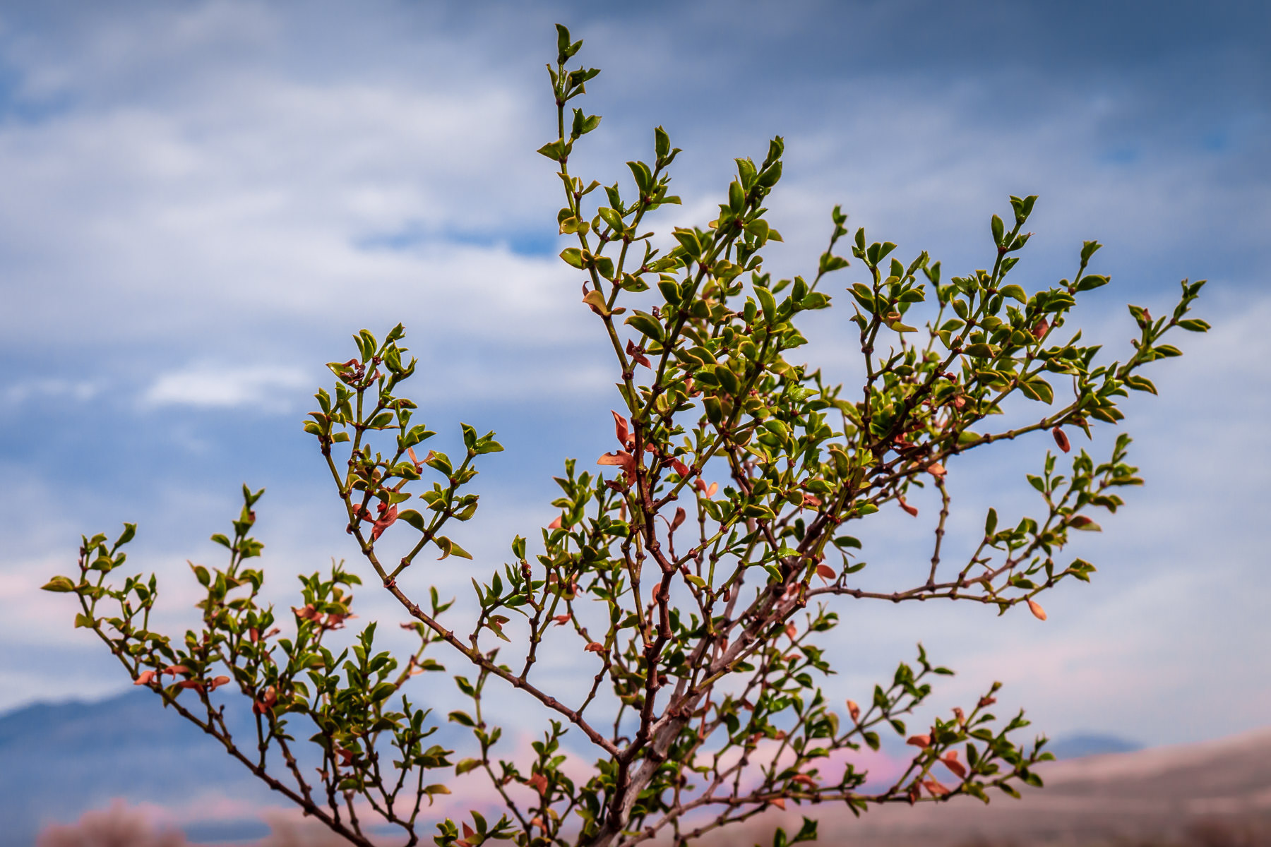 A plant grows in the desert of Nevada's Spring Mountain Ranch State Park on the outskirts of Las Vegas.