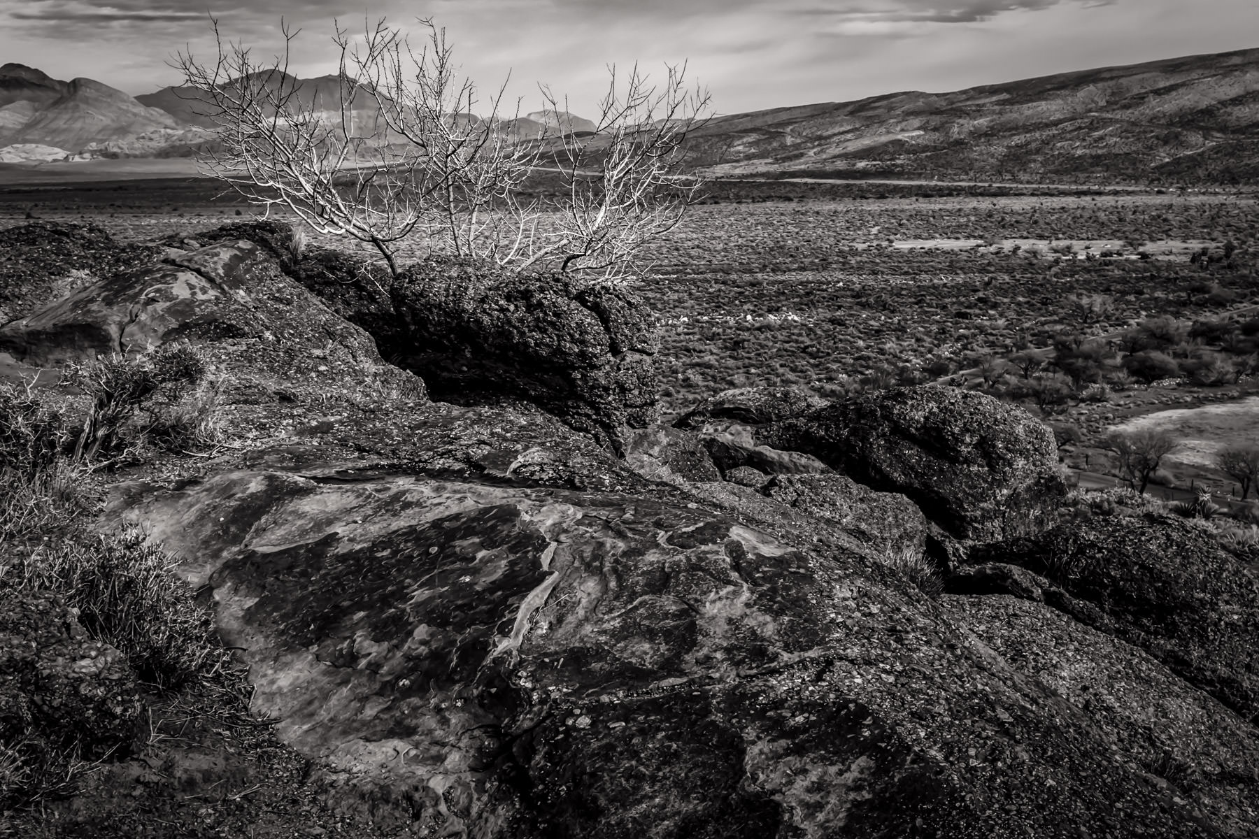 Dead branches sprout from atop a rocky ridge at Spring Mountain Ranch State Park, Nevada.