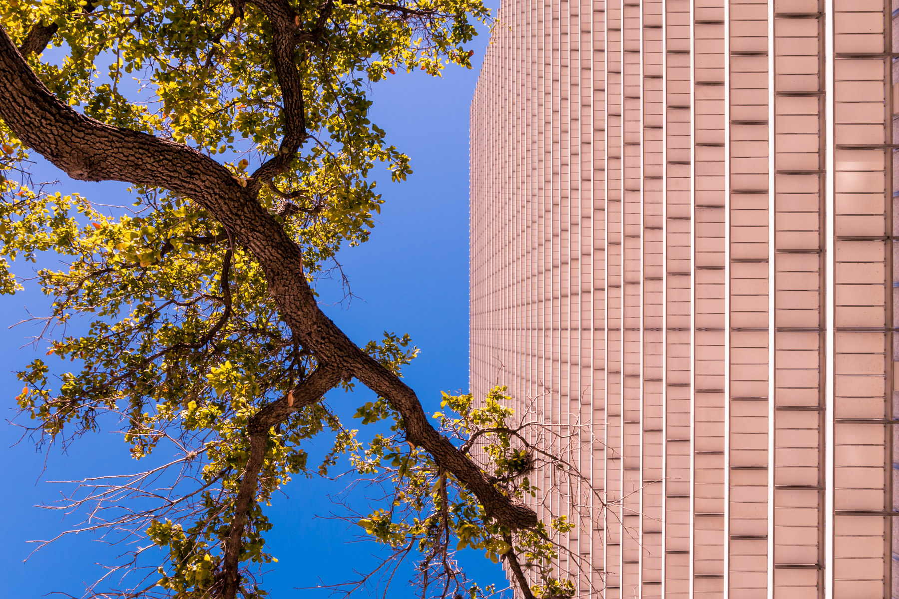 A tree branch appears to reach towards Downtown Houston's ExxonMobil Building.
