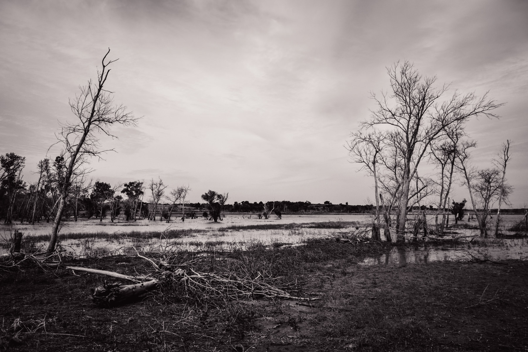 Trees grow in the marshes of Texas' Hagerman National Wildlife Refuge.